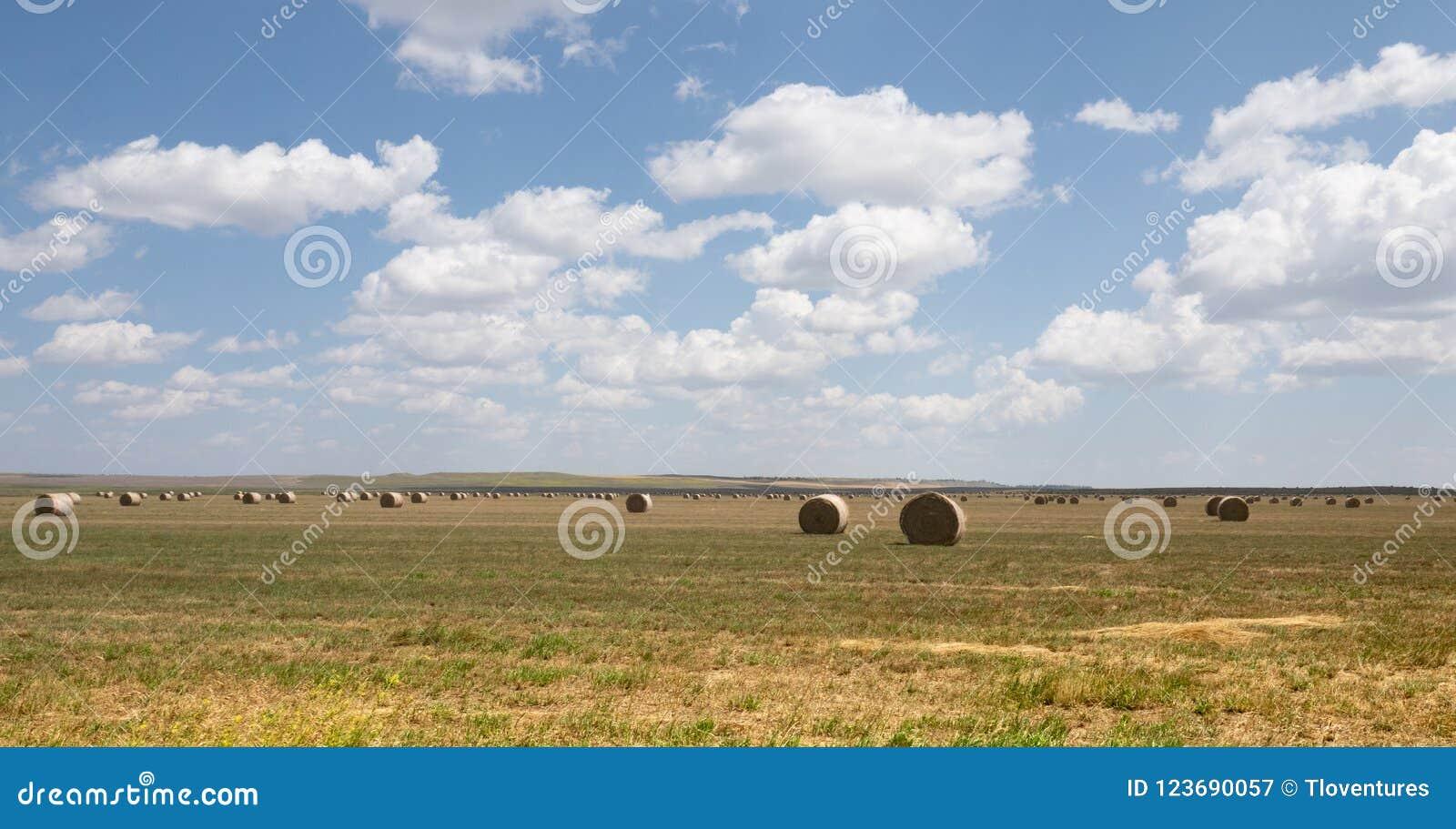 Grande Hay Bales redondo múltiplo em um campo em Montana rural