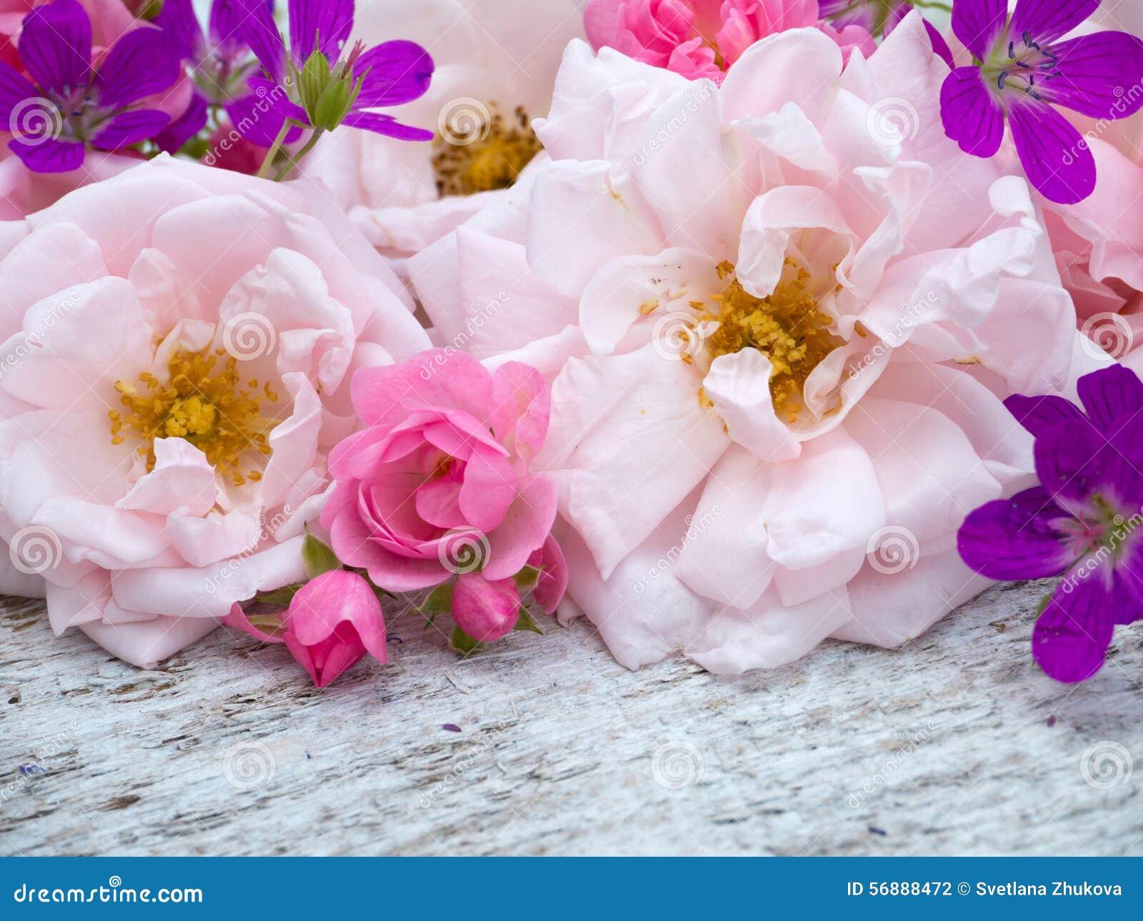 Grande impallidisca le rose ed il mazzo rosa luminosi rosa e piccoli del geranio