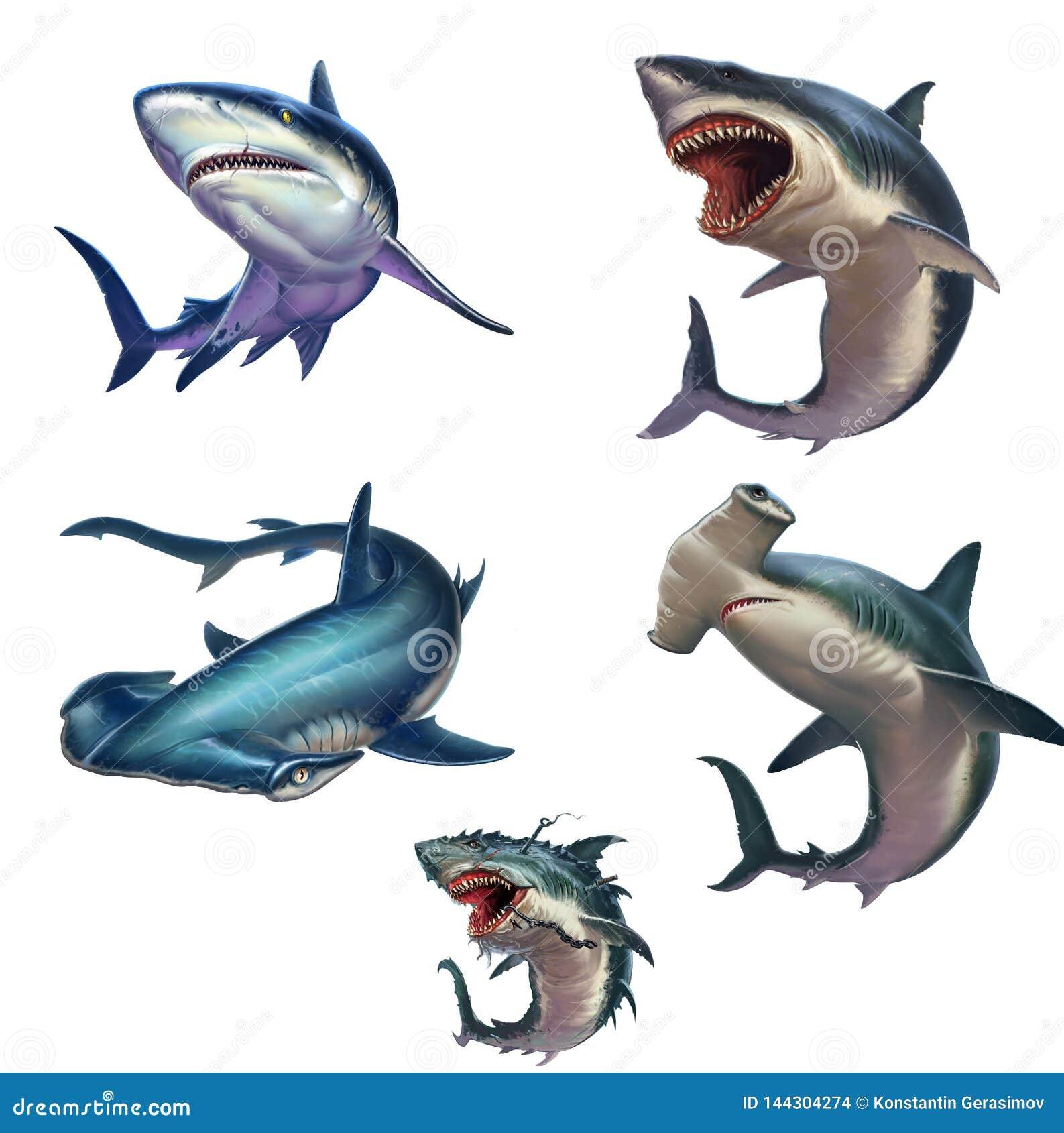Grande insieme dell illustrazione realistica isolata squali