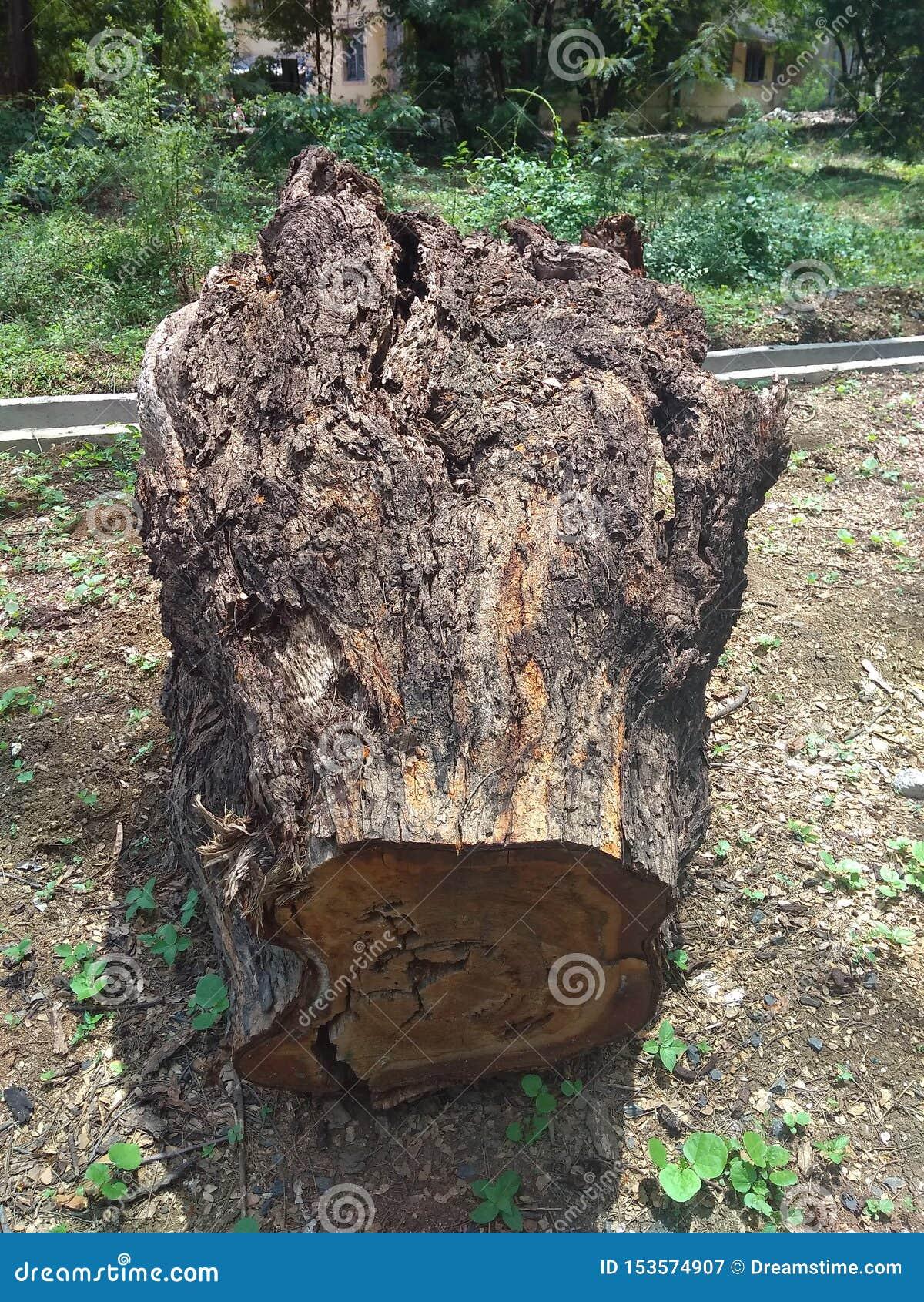 Grande legno dell albero accanto alla strada