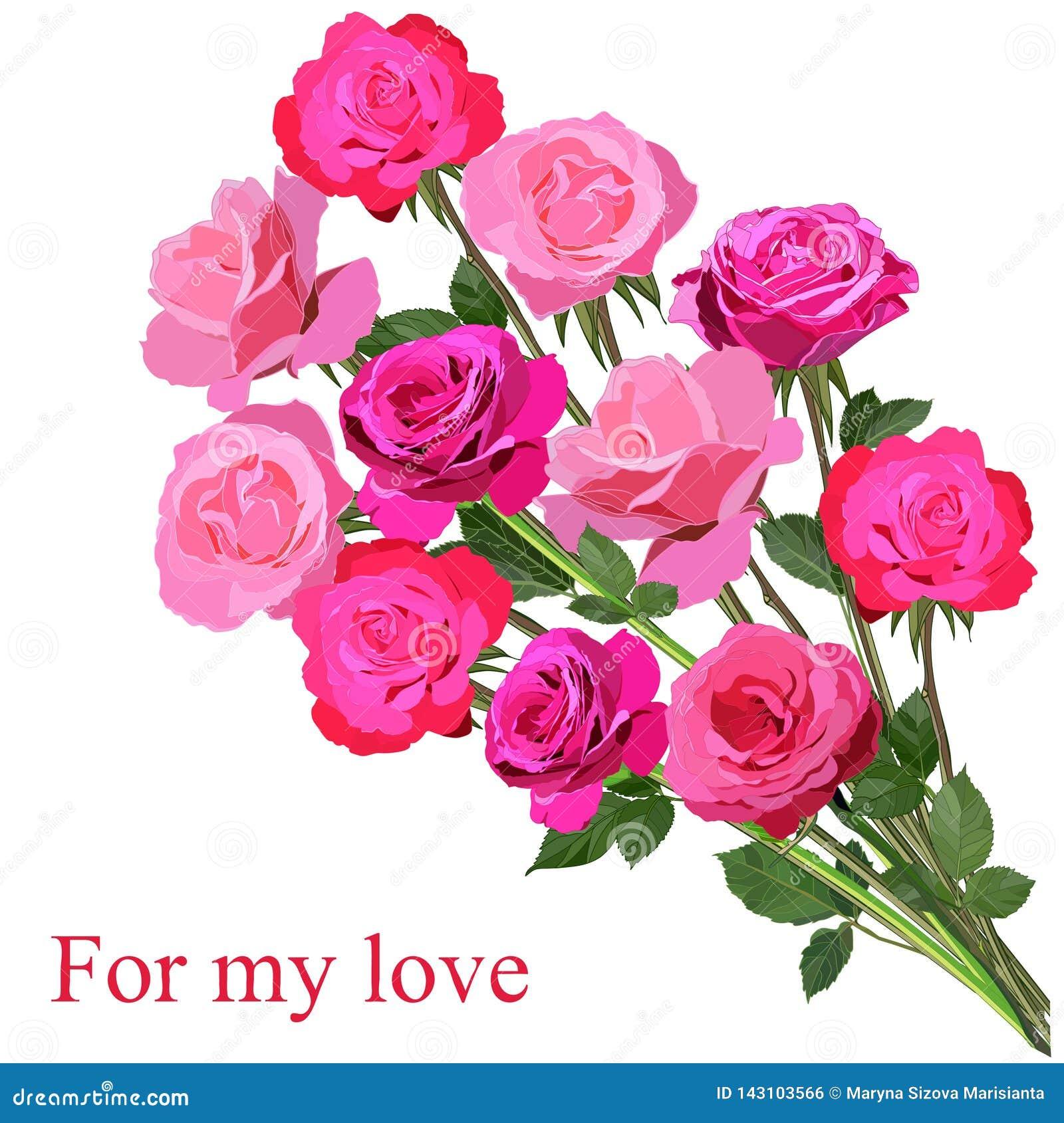 Grande mazzo delle rose rosa luminose isolate su fondo bianco