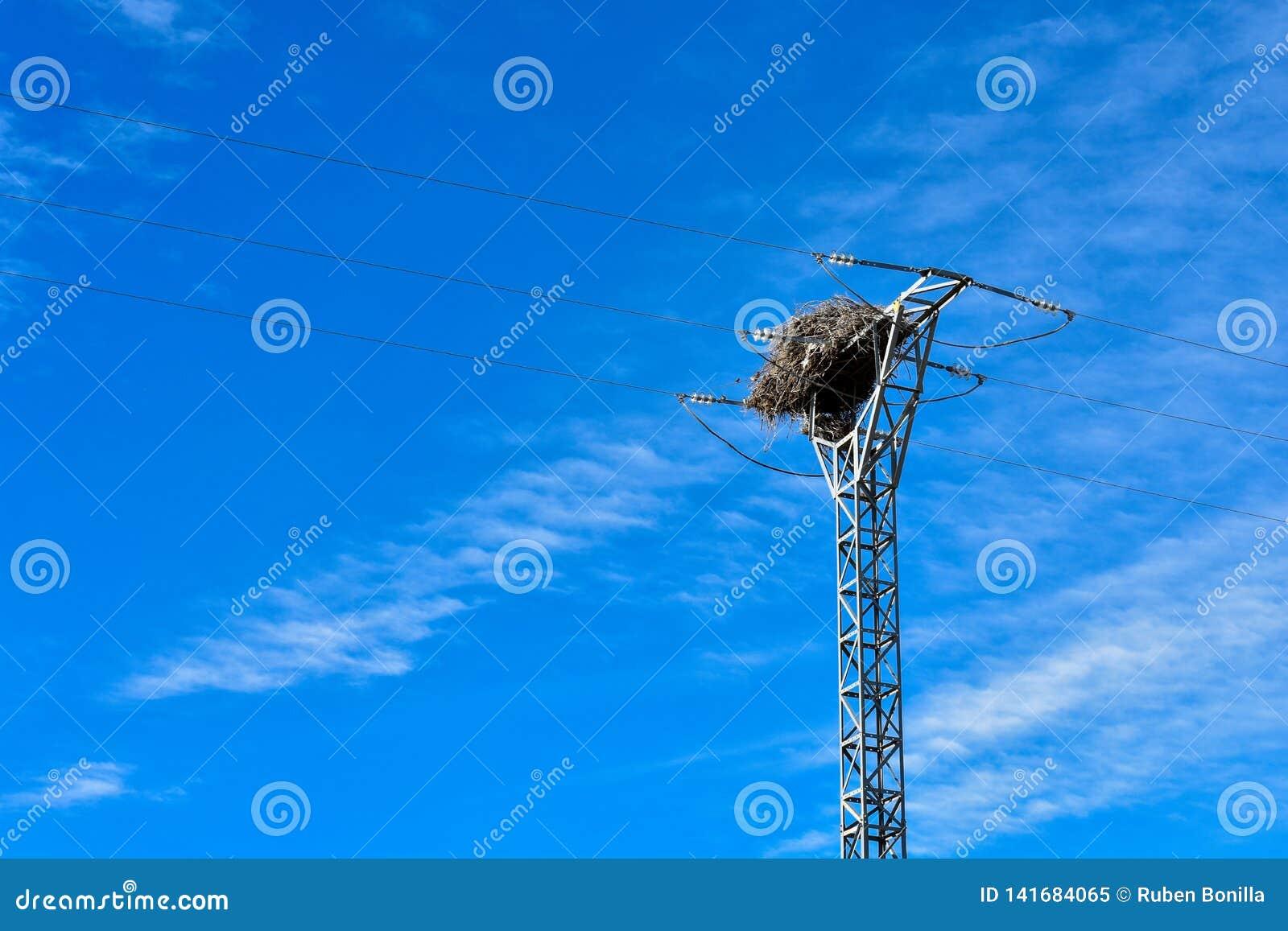 Grande nido fatto con i rami degli alberi alla cima di una torre elettrica di alta tensione che conduce l elettricità alle case i