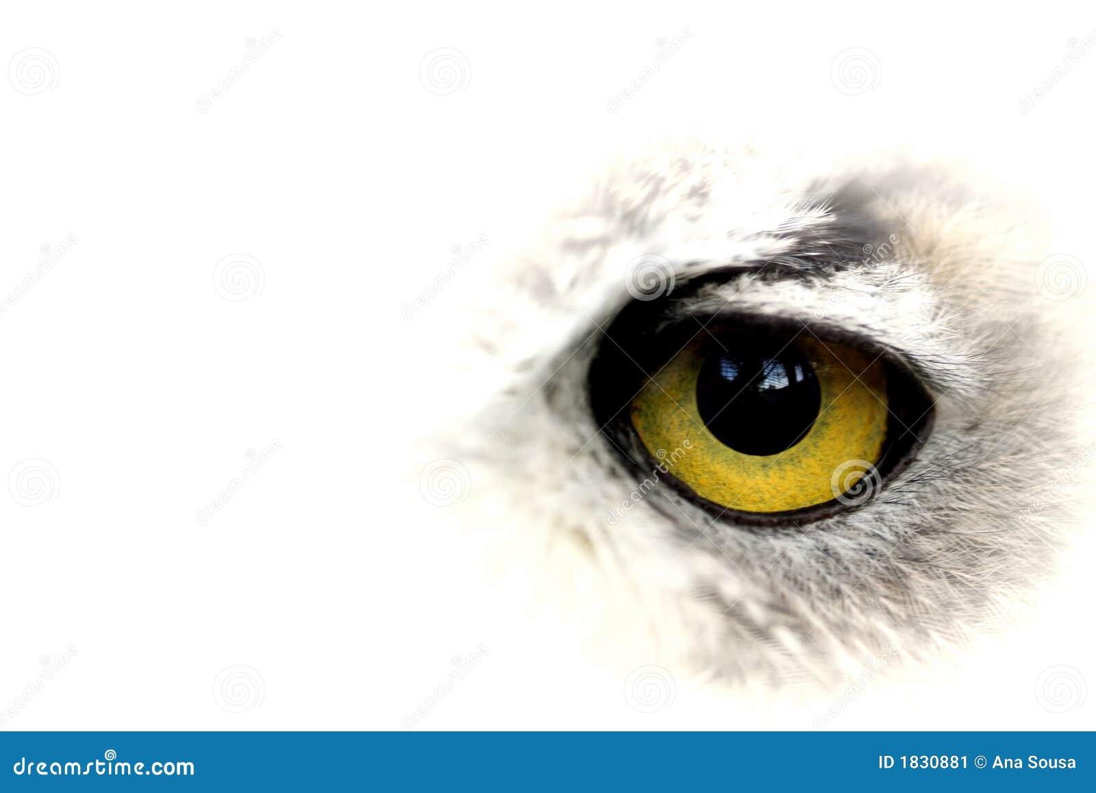 Grande occhio giallo del gufo
