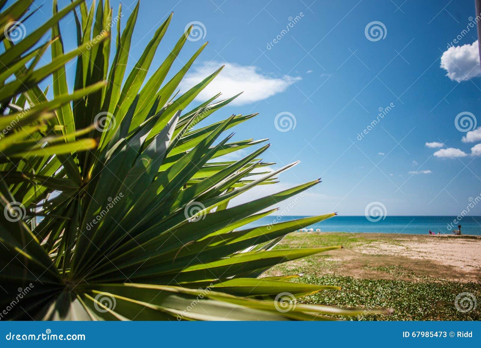 grande palmette sur la plage de mer littoral de sable image stock image du vert lagune 67985473. Black Bedroom Furniture Sets. Home Design Ideas