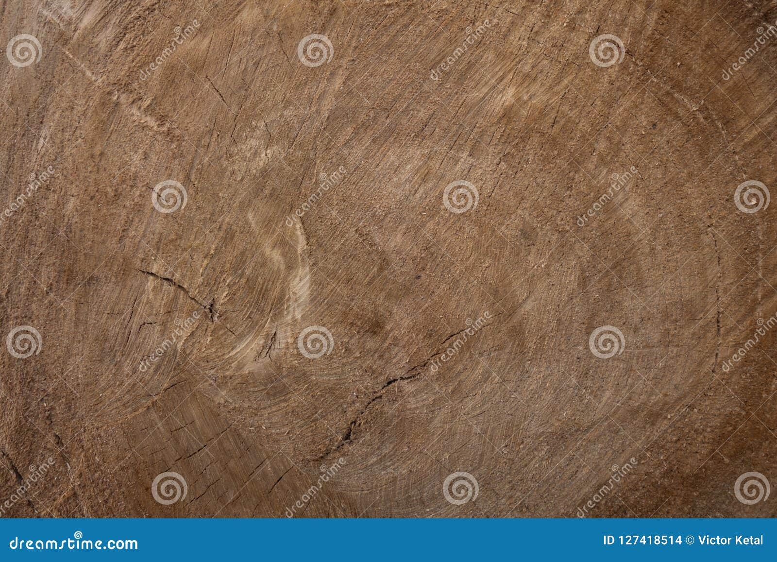 Grande pezzo circolare di sezione trasversale di legno con il modello e le crepe di struttura dell anello di albero Sezione trasv