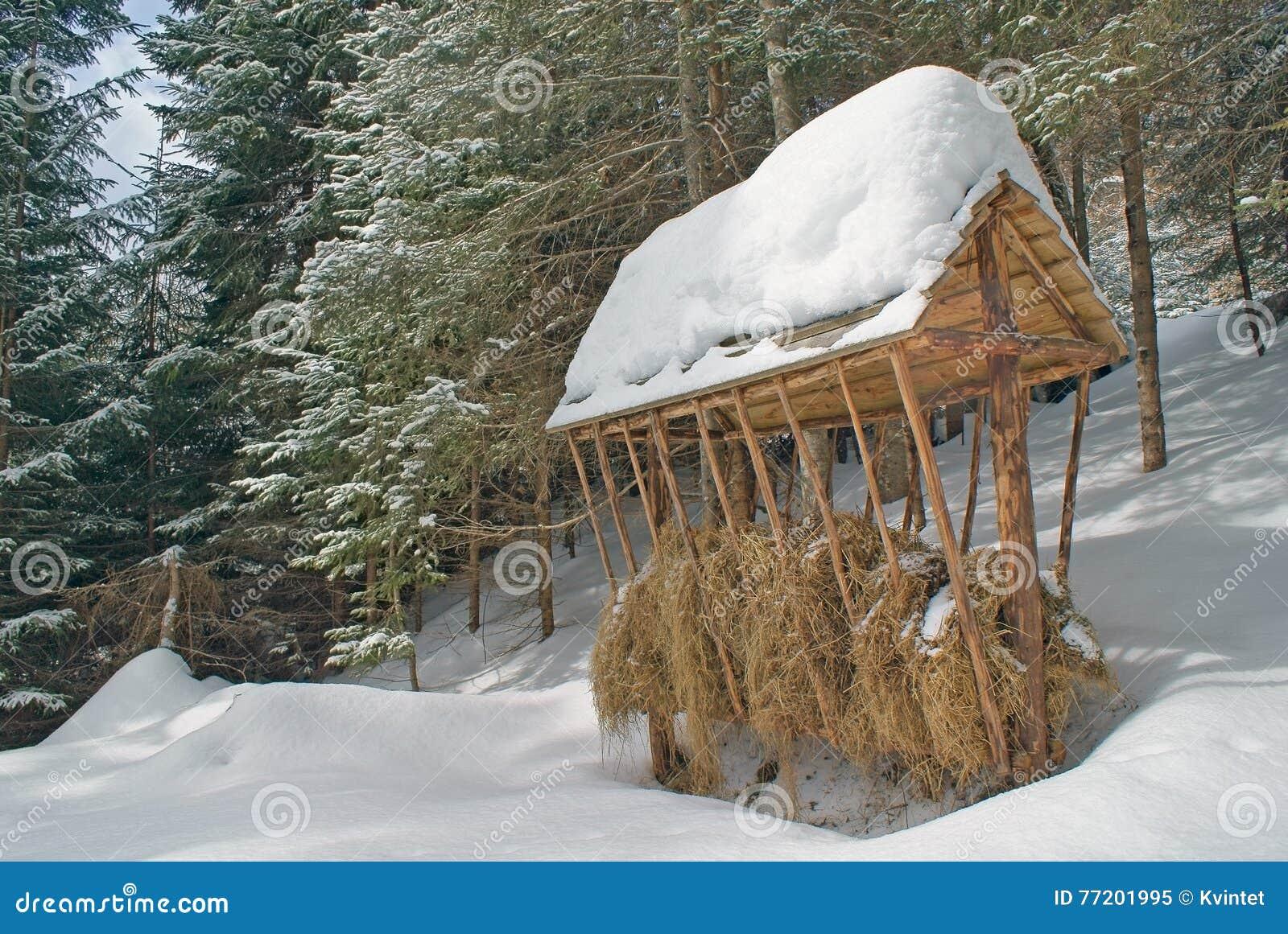 Grande primo piano di legno dell alimentatore con fieno nell inverno