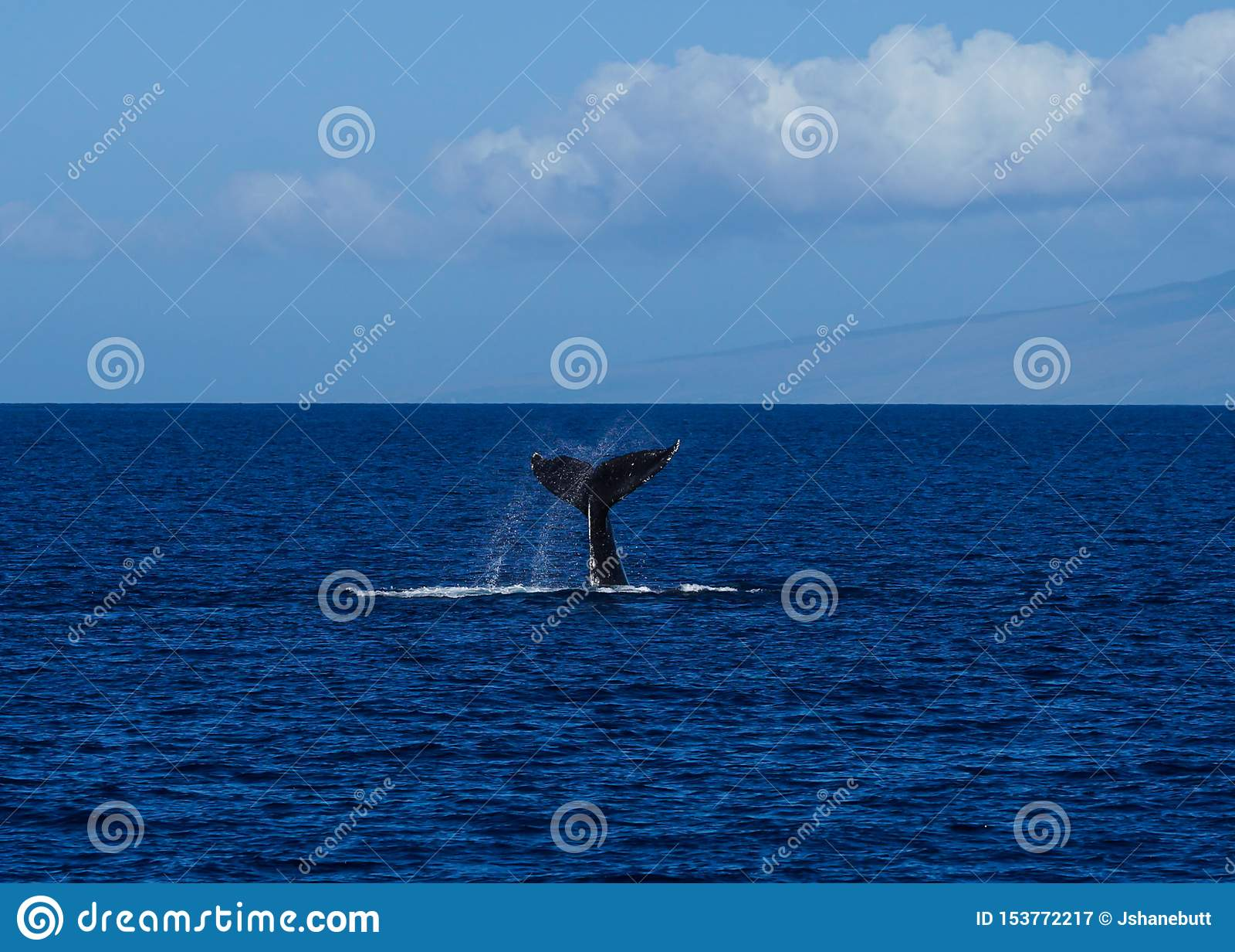 Grande radiodétection à basculement de diagramme de queue de baleine de bosse