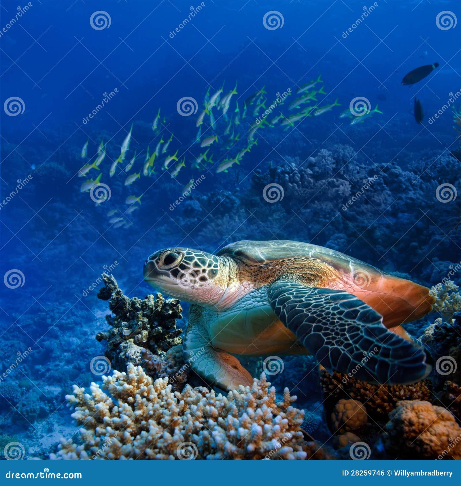 Grande turle del mare subacqueo