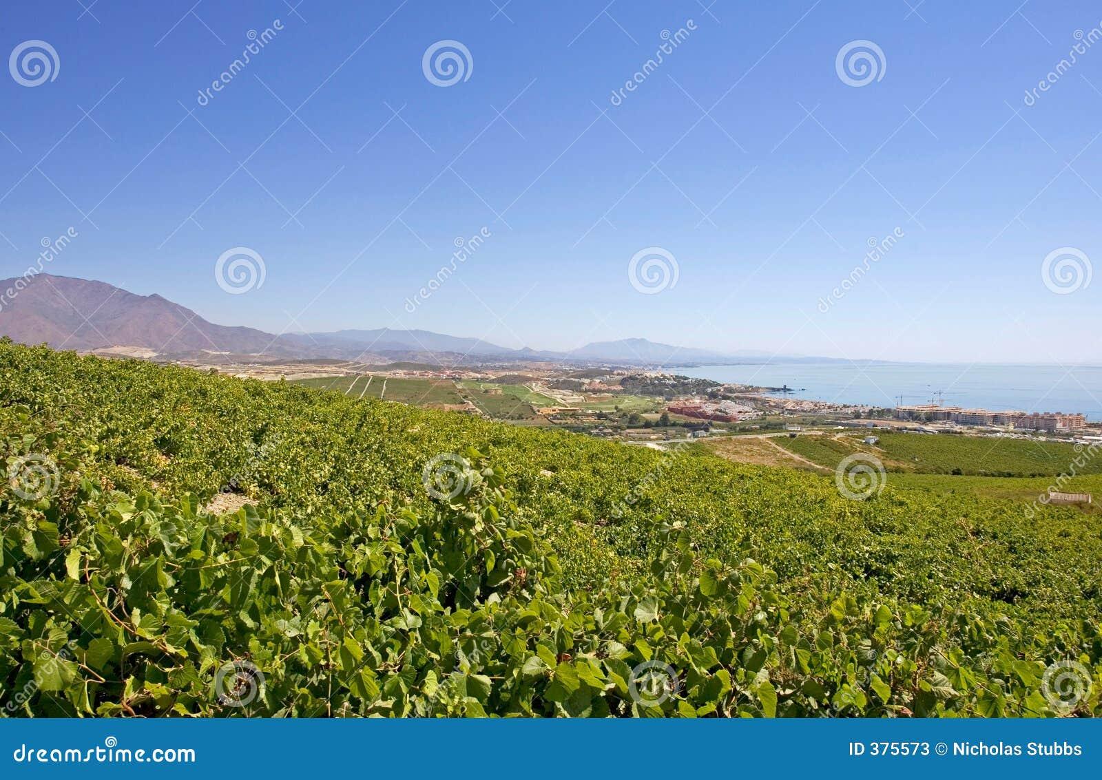 Grandes vignes espagnoles donnant sur Duquesa Manilva à travers à M
