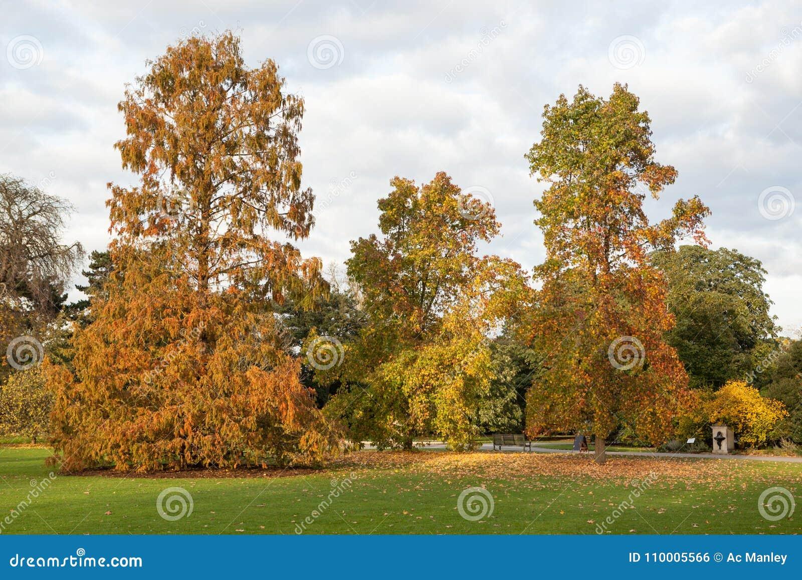 Grandi Alberi Da Giardini grandi alberi autunnali fotografia stock. immagine di fogli
