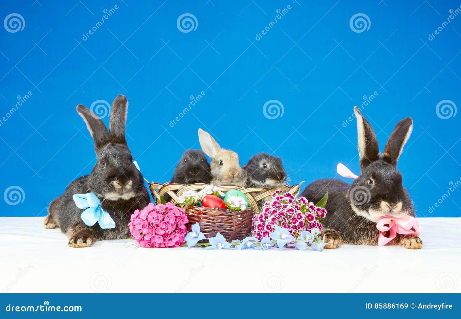 Grandi Conigli Con Gli Archi E Piccoli Conigli In Un Canestro Vicino