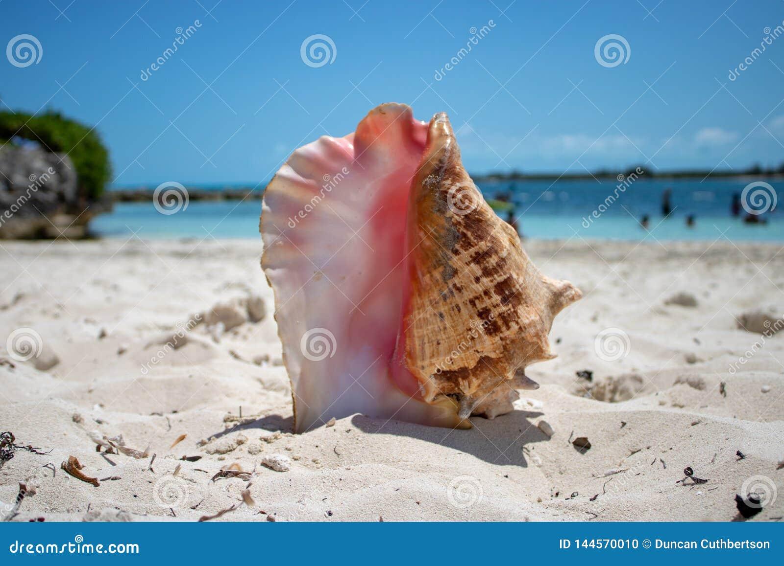 Grandi coperture su una spiaggia tropicale