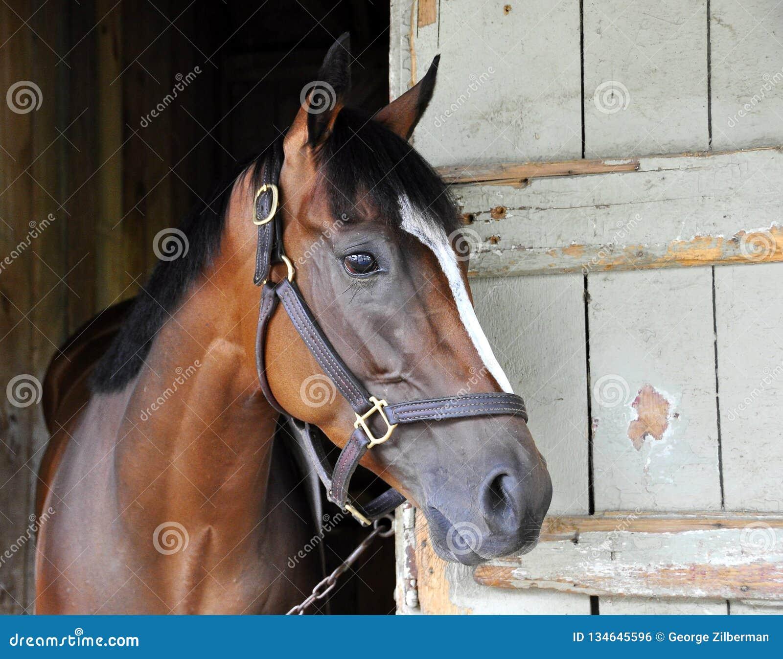 Grandi foto di corsa di cavalli da Fleetphoto