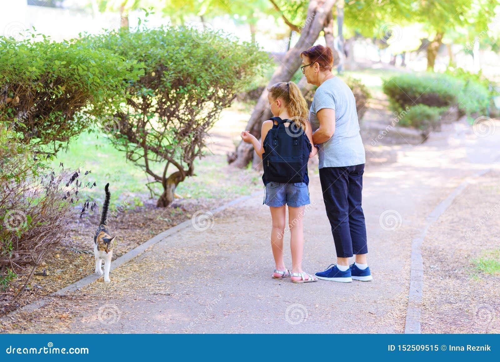 Grandma και εγγονή που εξετάζουν το άστεγο γατάκι στο υπαίθριο πάρκο