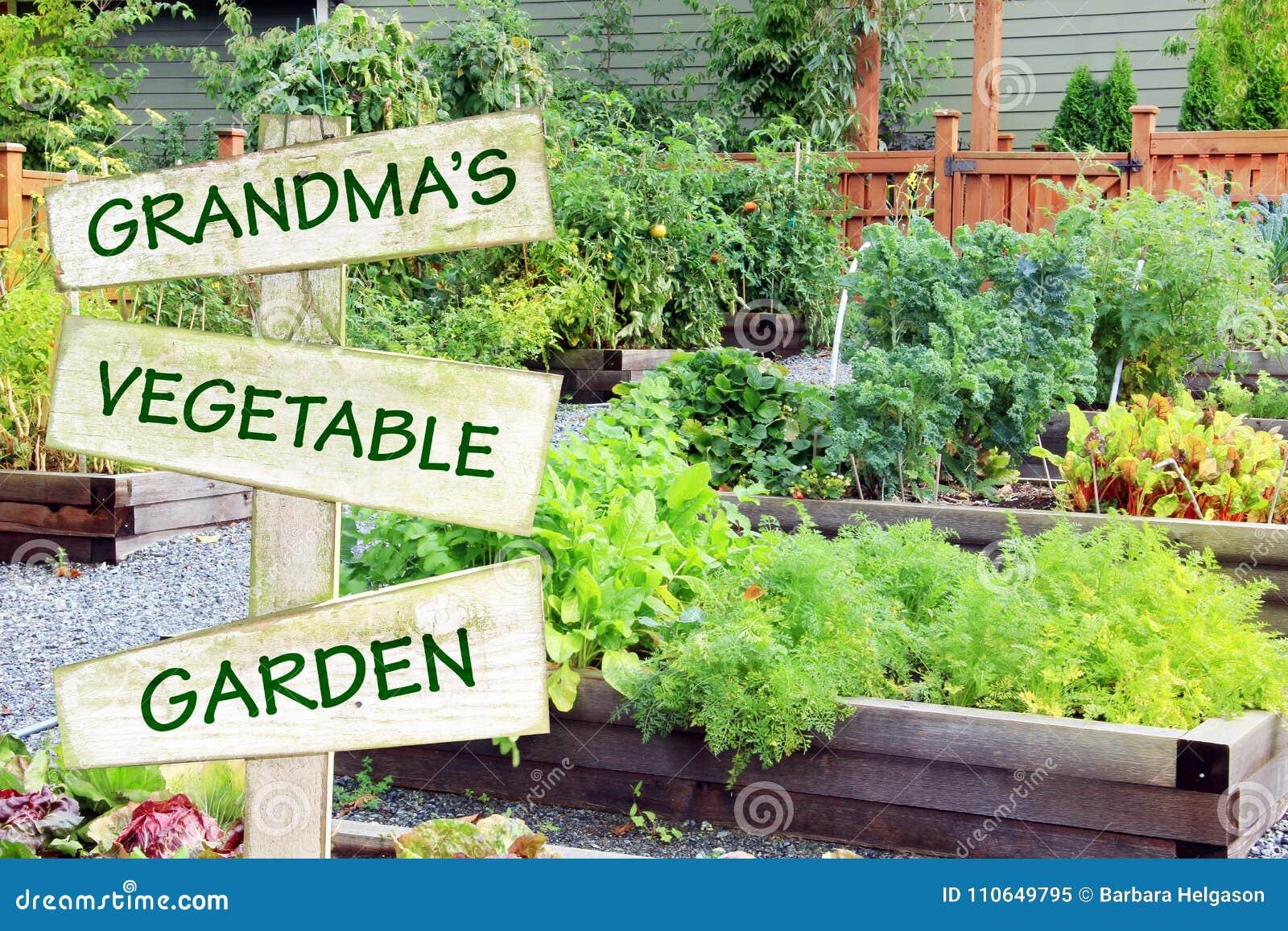 Grandma`s Vegetable Garden. Organic Community Garden Growing Vegetables,  Herbs And Fruit.