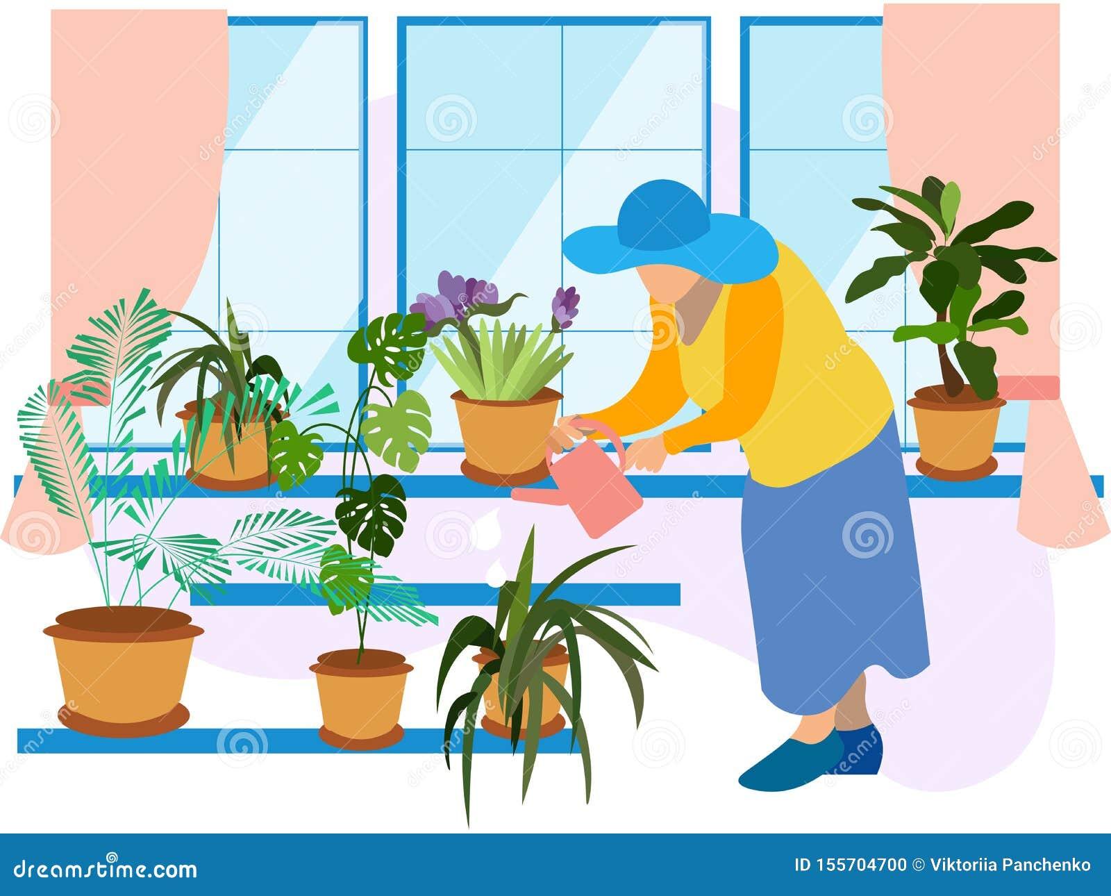 Grandmother, a pensioner watering indoor flowers. Winter garden, potted flowers. In minimalist style Cartoon flat raster