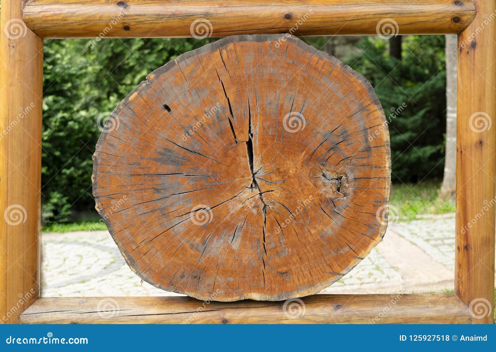 Grands morceaux circulaires de section transversale en bois avec l anneau annuel