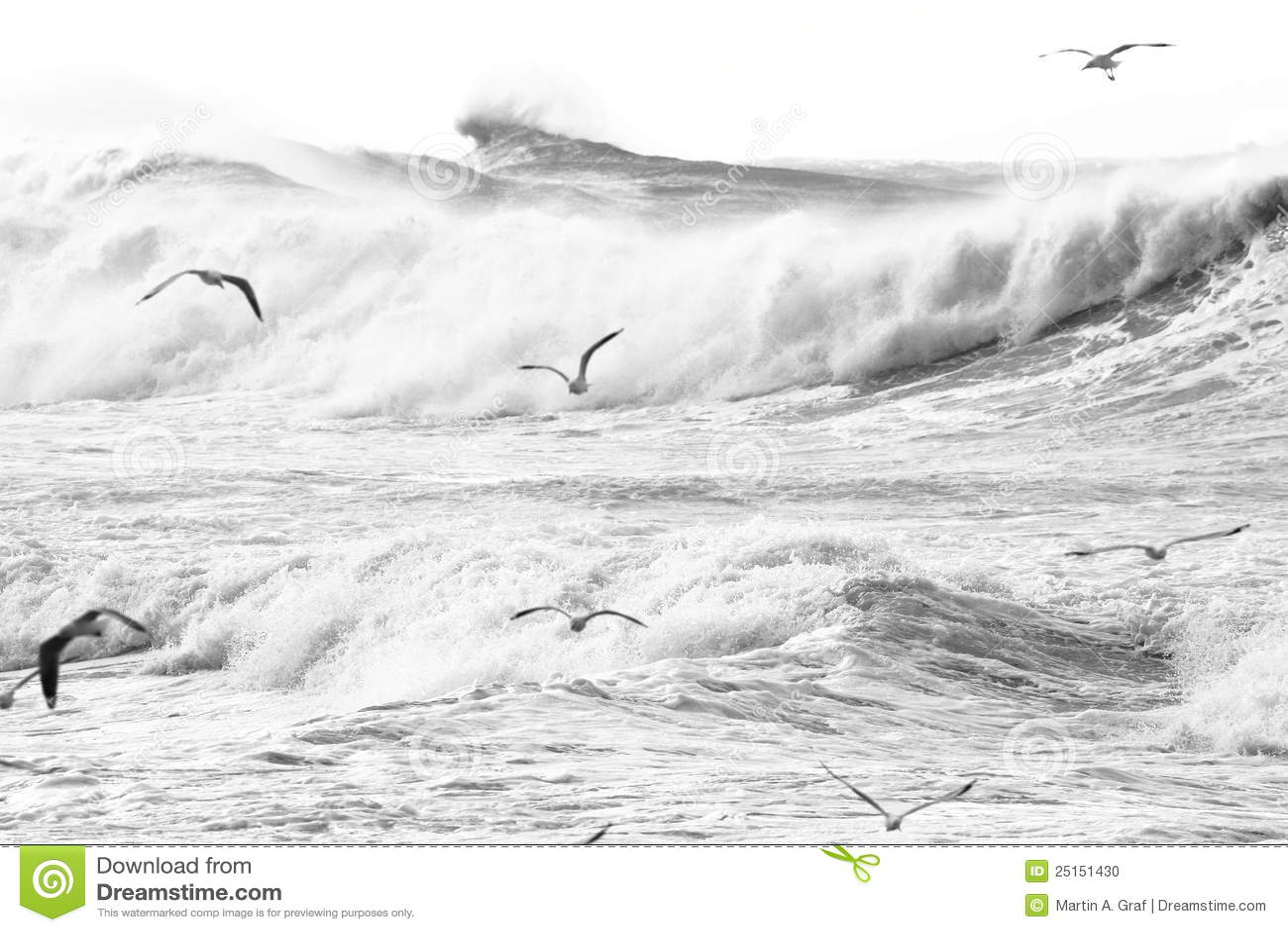 Grands ondes et oiseaux