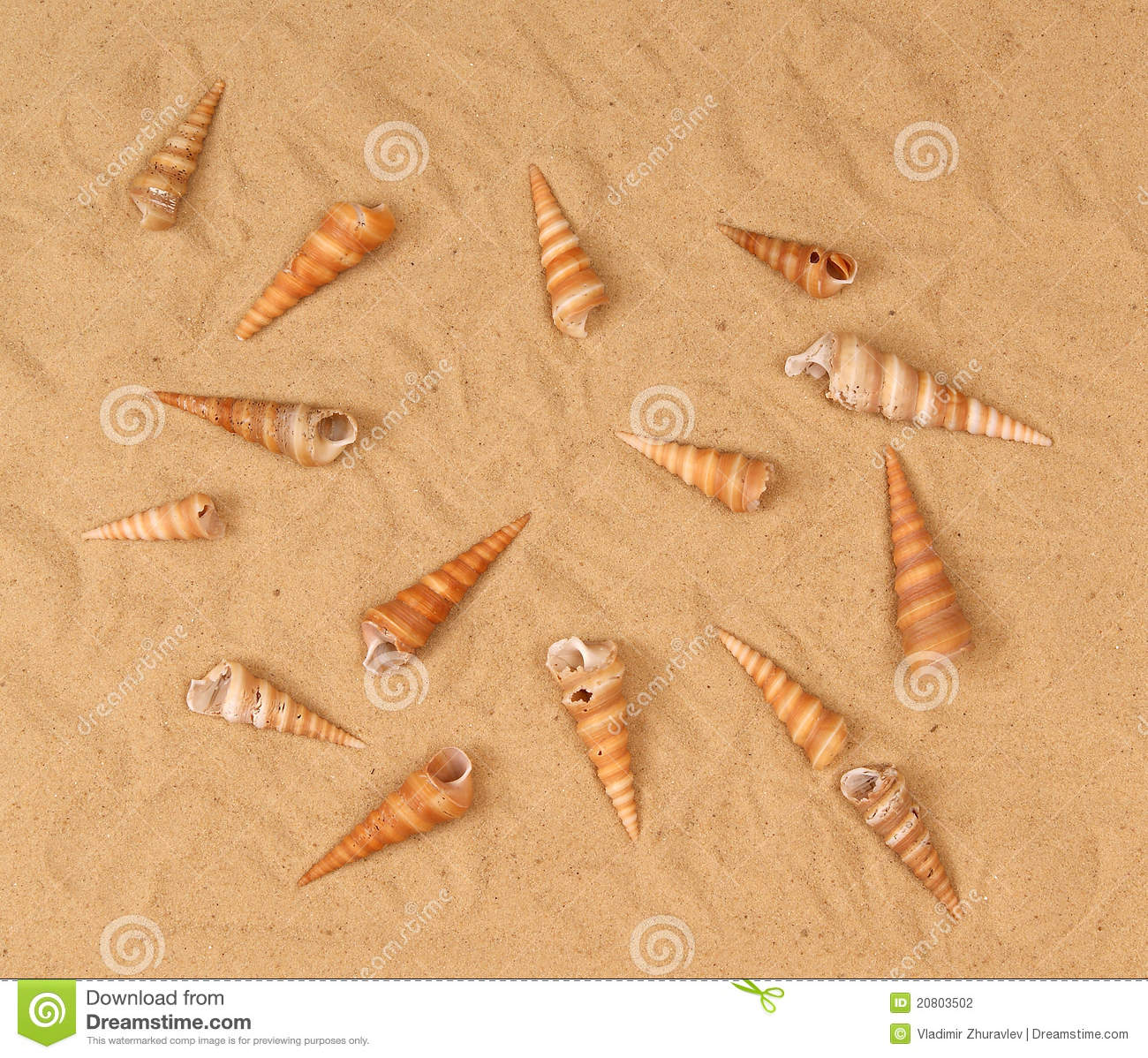 Grands seashells sur le sable