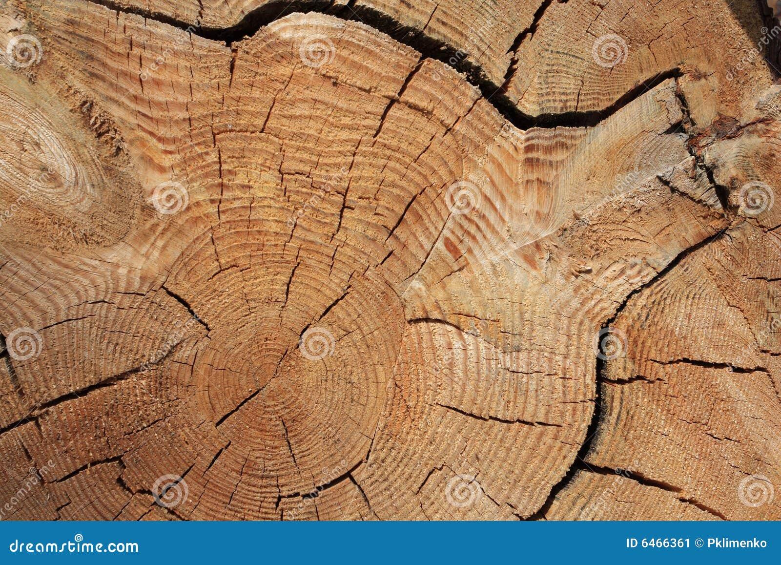 Granic wiązki tekstury drzewo