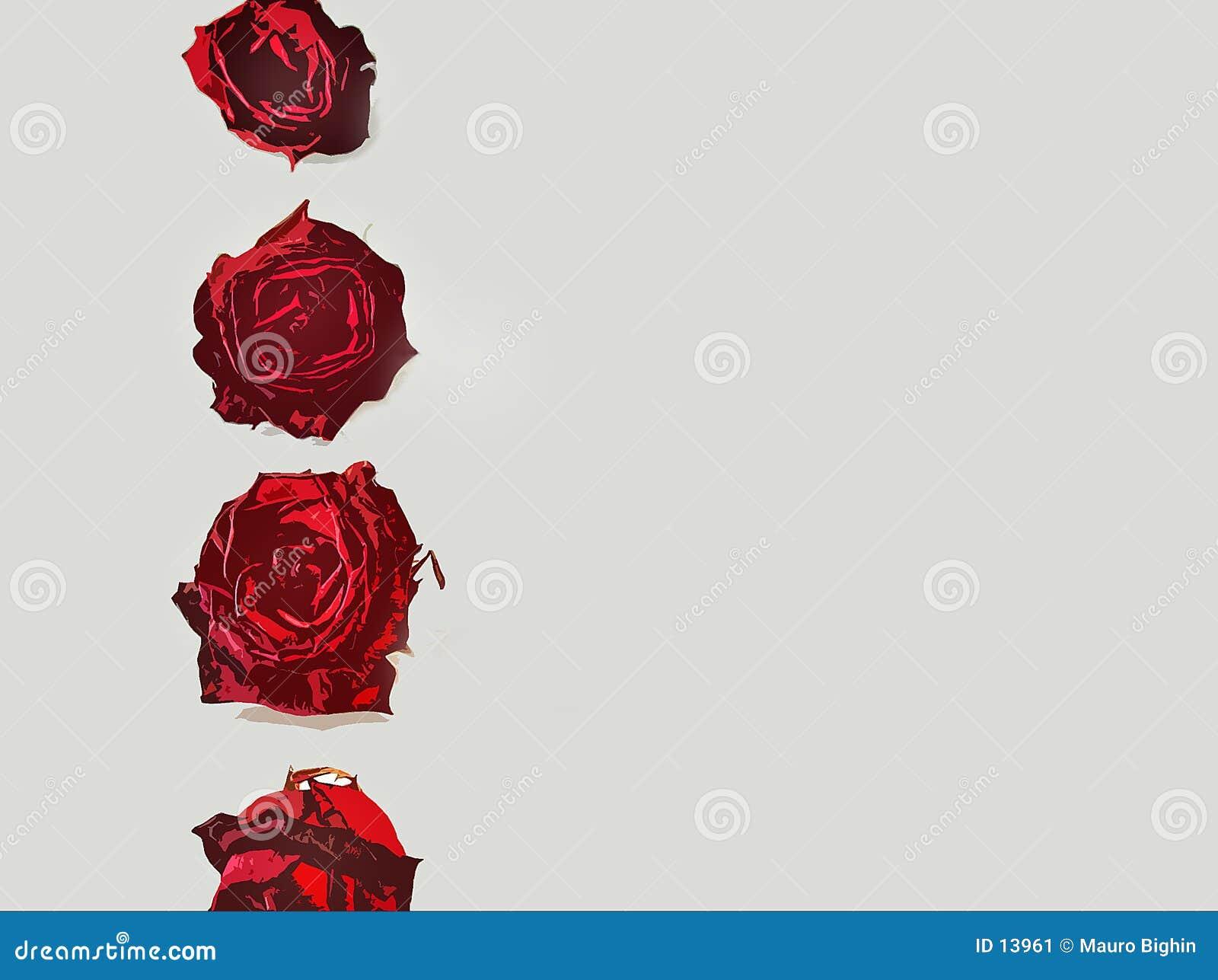 Granica listy rose miłości.