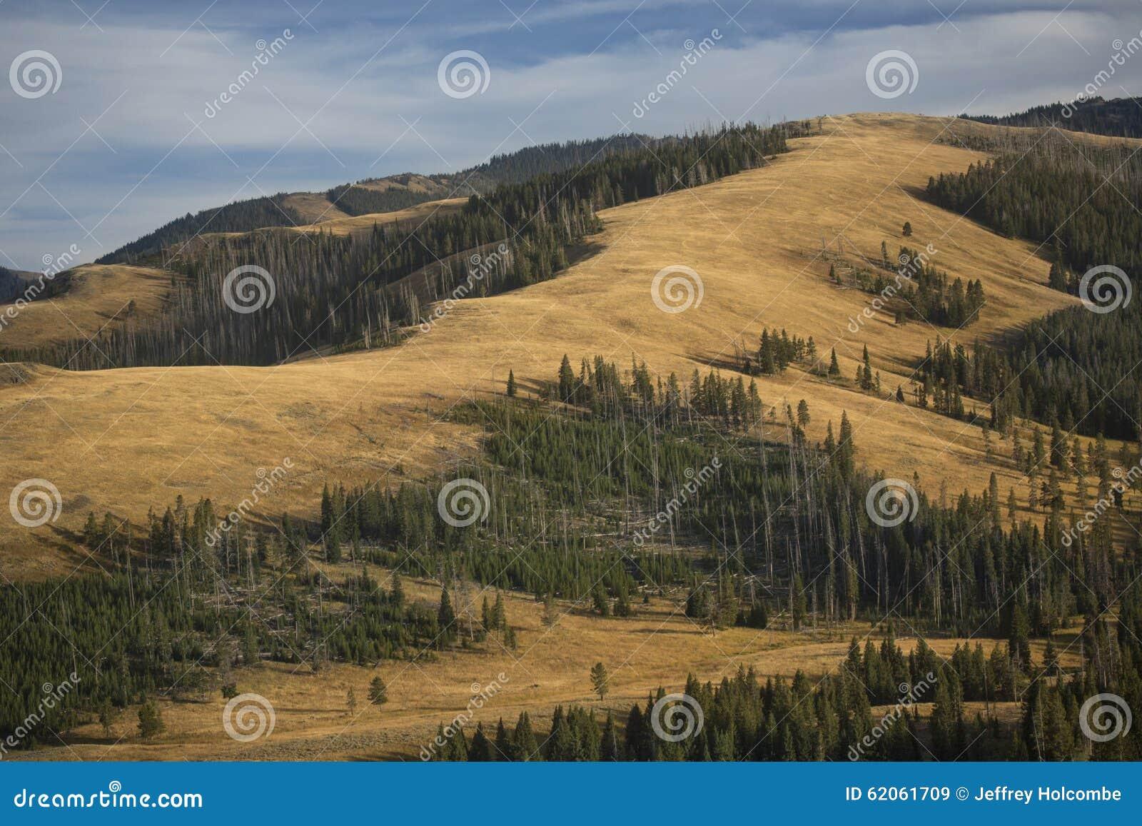 Granie i kolor żółty równiny zbliżają Mt Washburn w Yellowstone, Wyomi