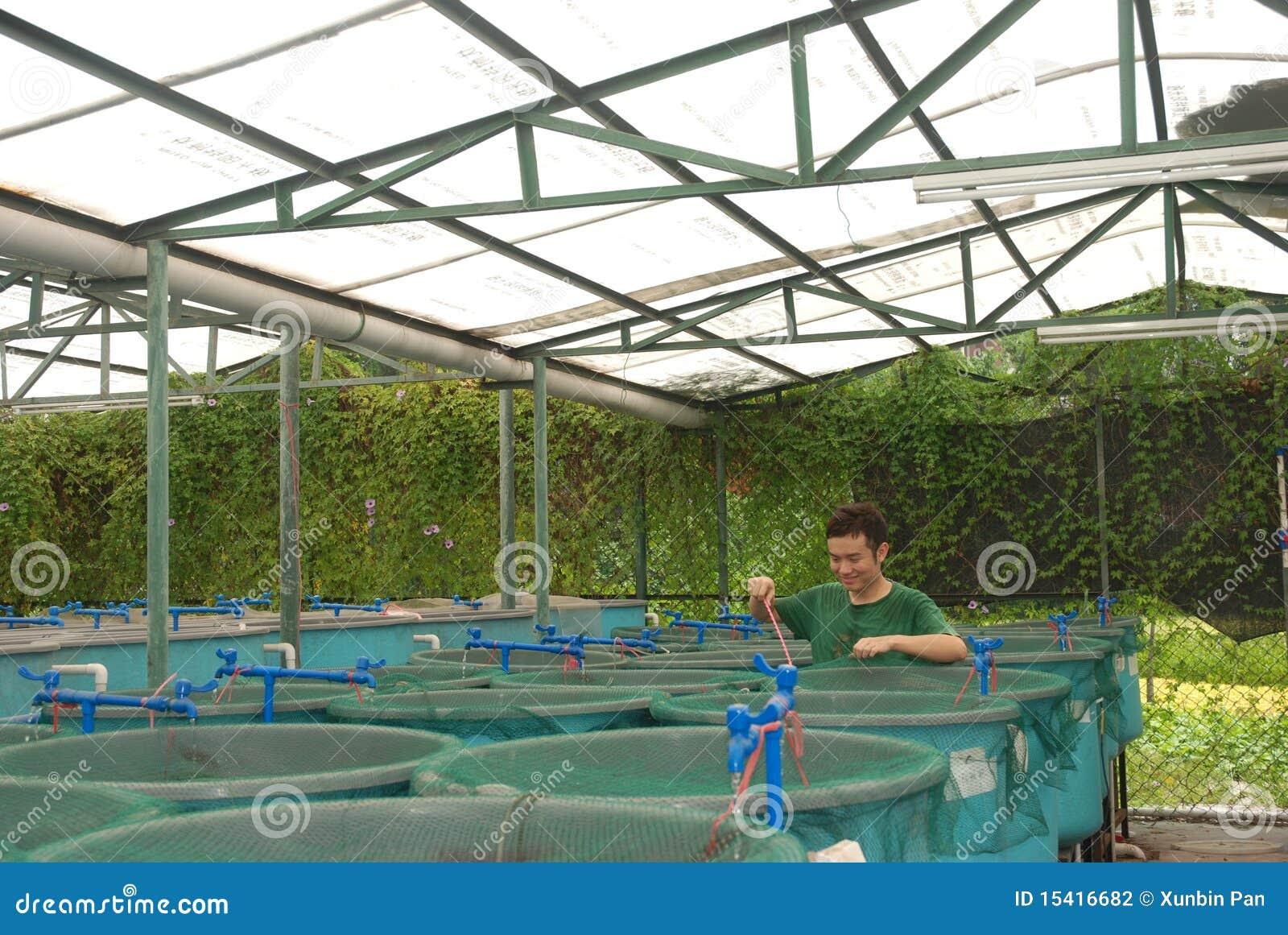 Granja de la acuacultura de la agricultura