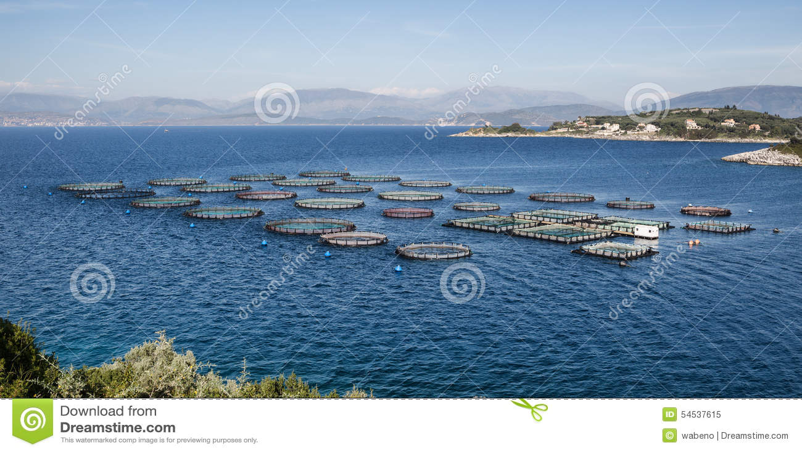 Granja de pescados con las jaulas flotantes imagen de for Construccion de jaulas flotantes para tilapia