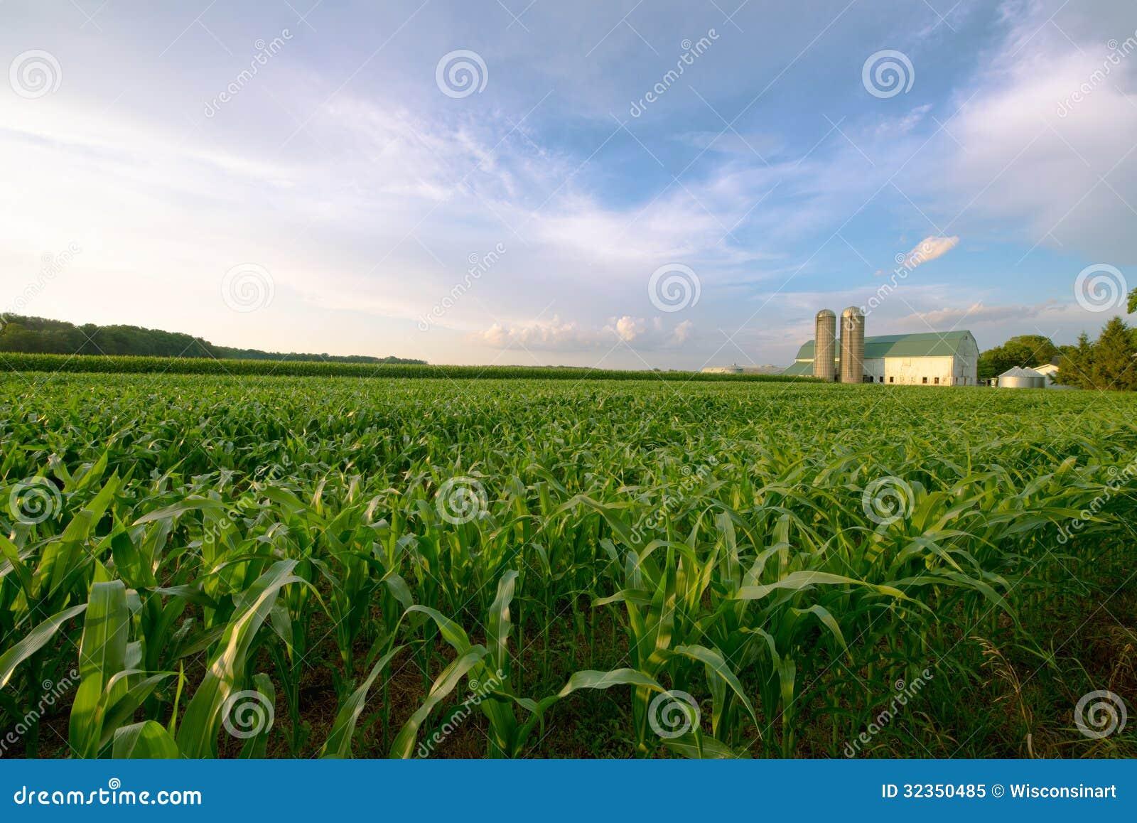 Granja lechera de Wisconsin, granero por el campo del maíz