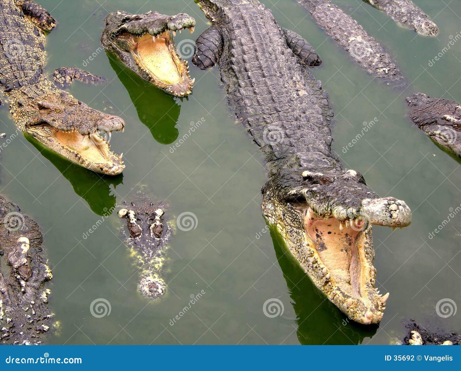 Granja y parque zoológico del cocodrilo de Samutprakan