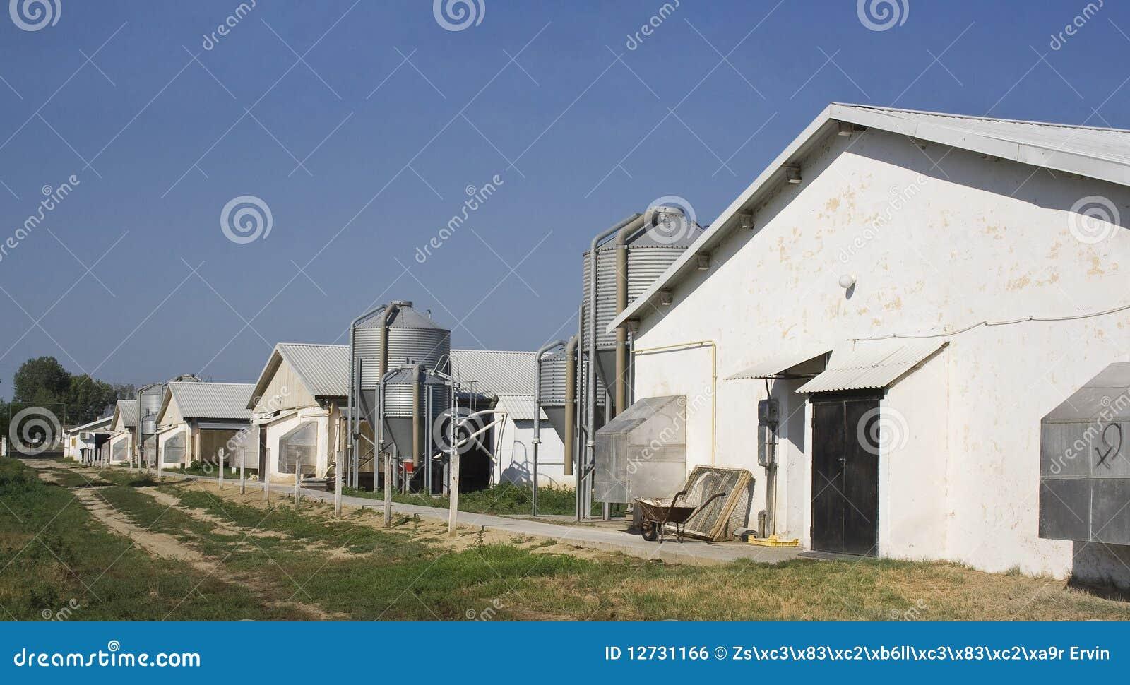 Granjas y silos de pollo