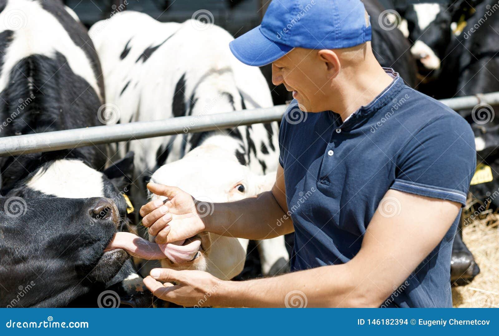 Granjero alegre rodeado por las vacas en granja