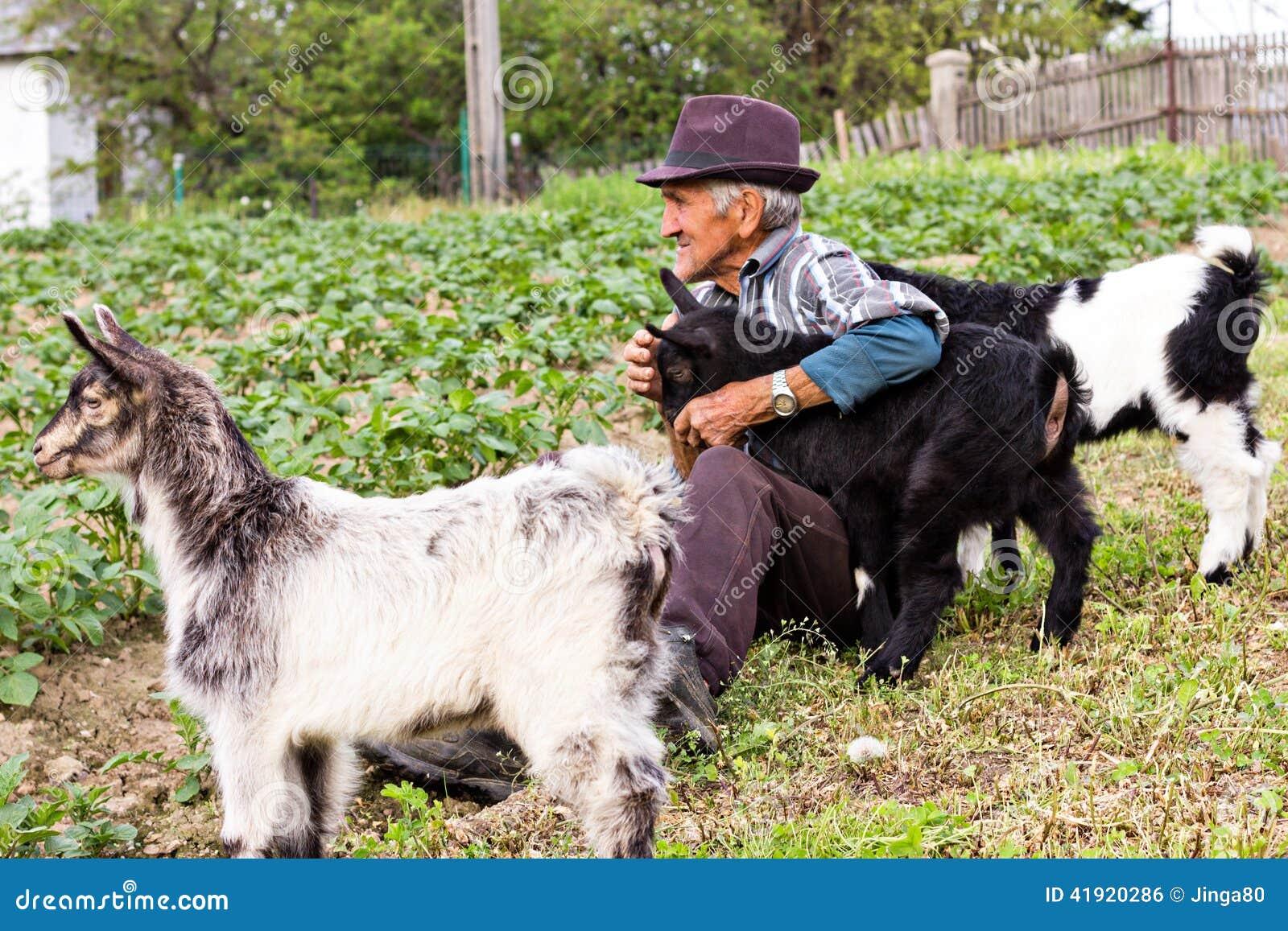 Granjero mayor con la cabra de tres bebés