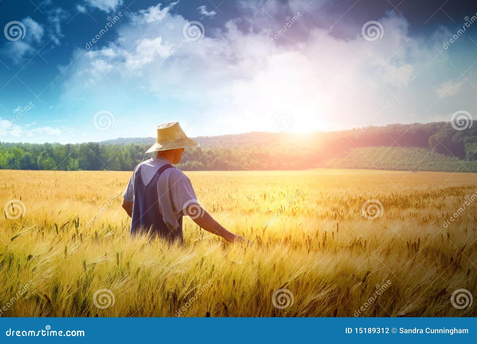 Granjero que recorre a través de un campo de trigo