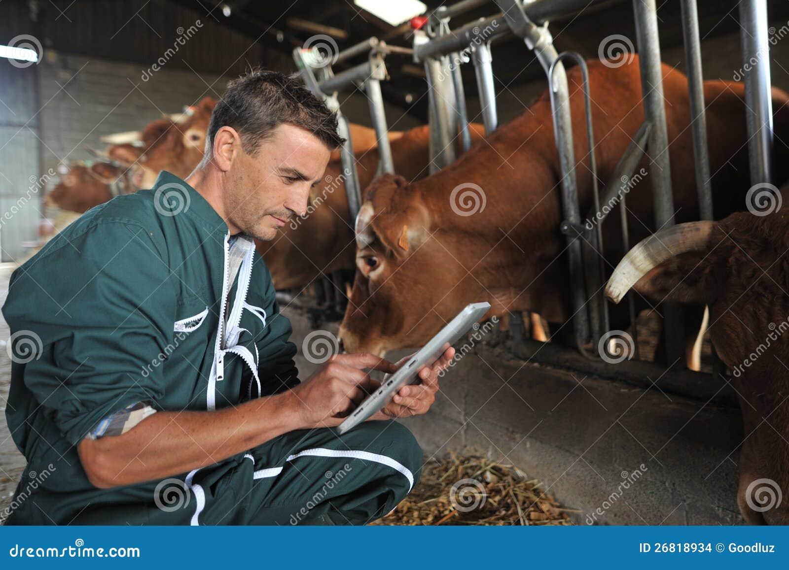 Granjero y vacas