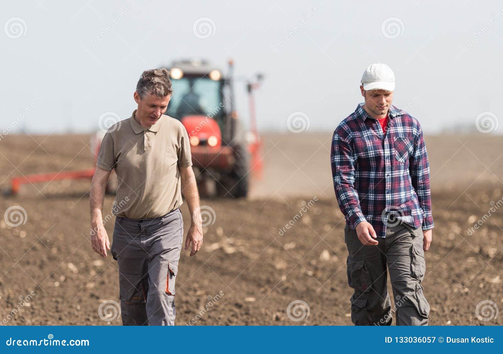Granjeros examing campos de trigo plantados