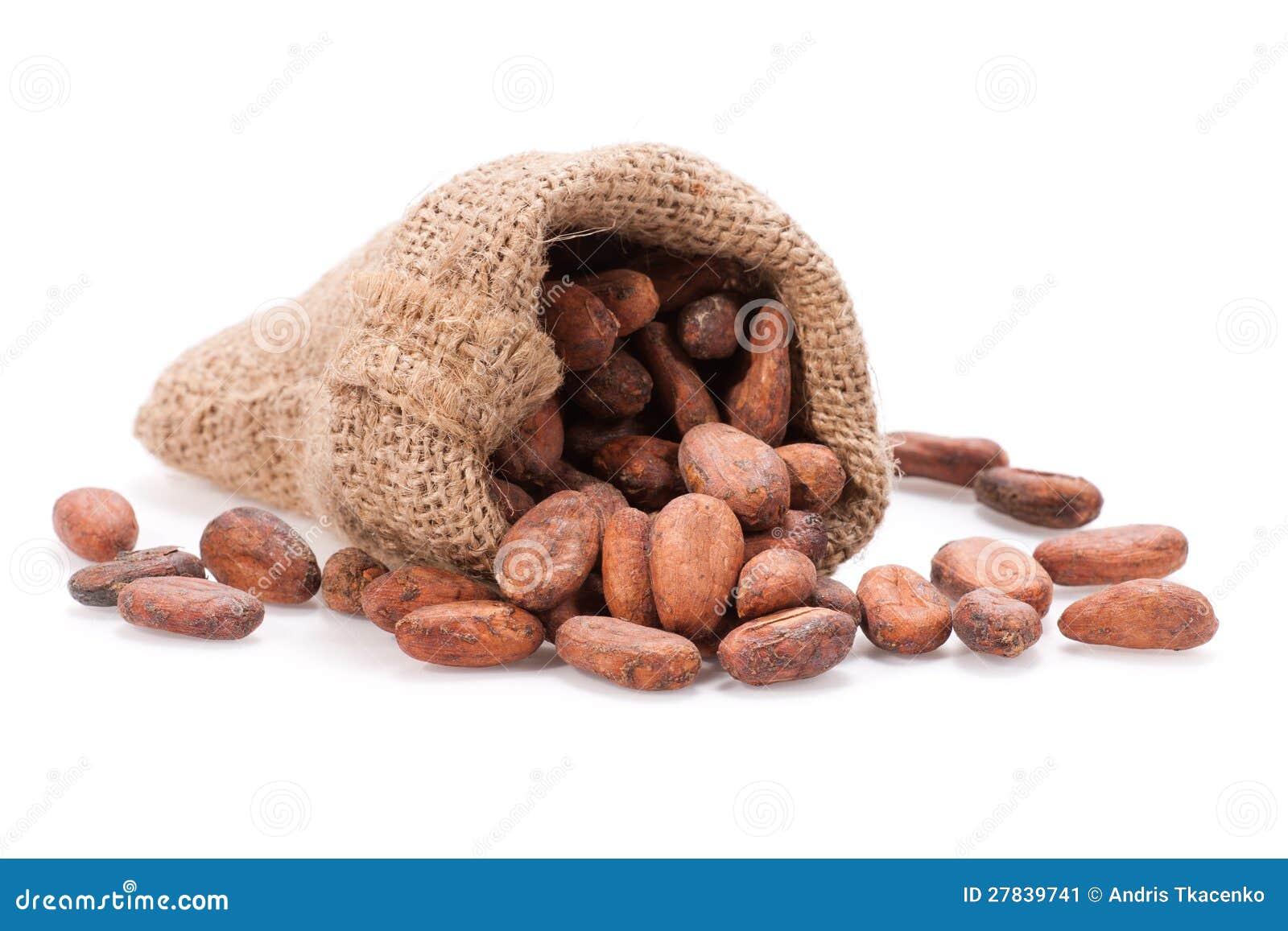 Grano de cacao sin procesar