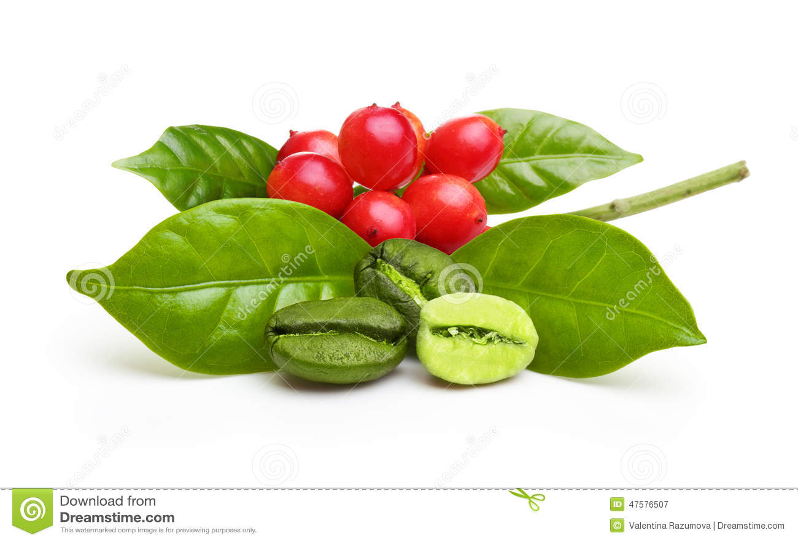 Granos de café verdes con la hoja