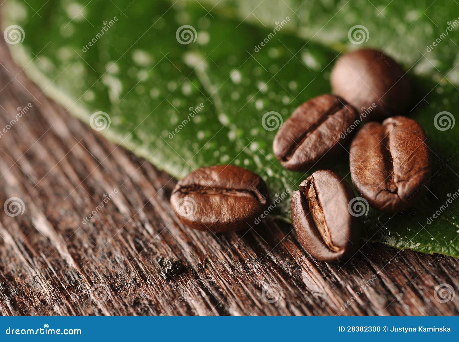 Granos y hoja de café