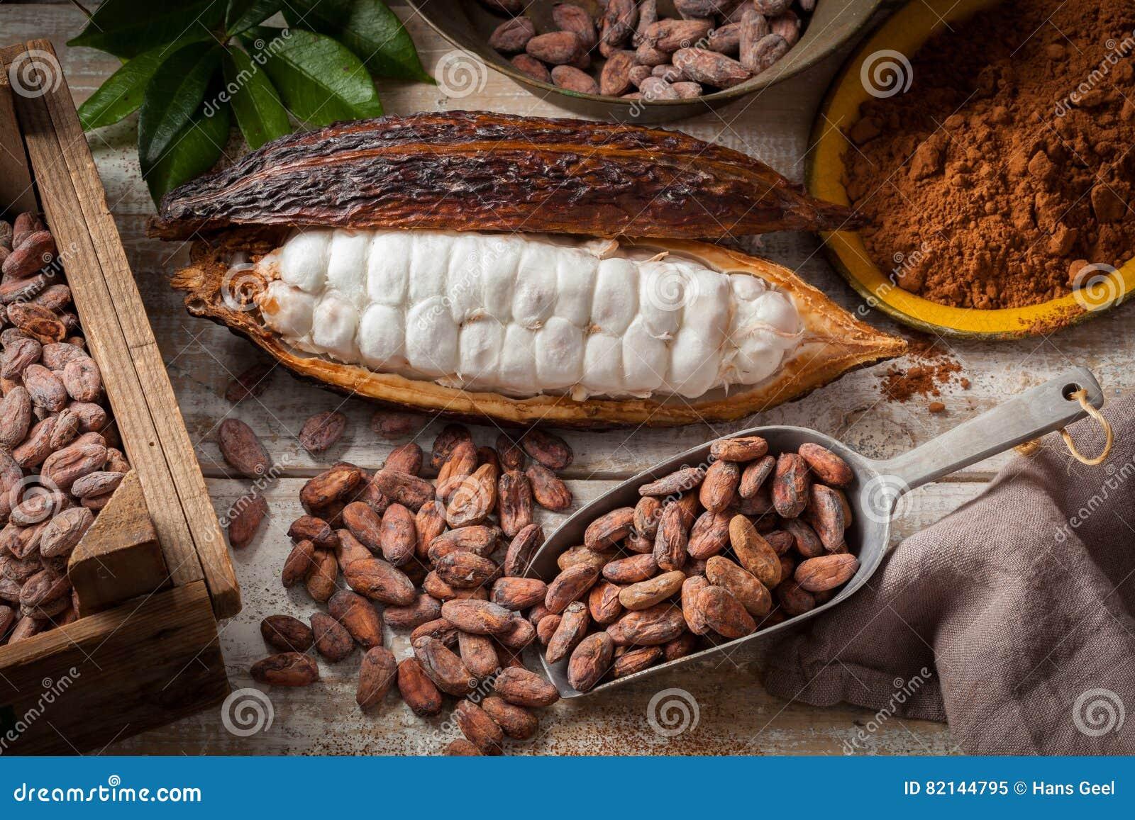 Granos y vaina de cacao