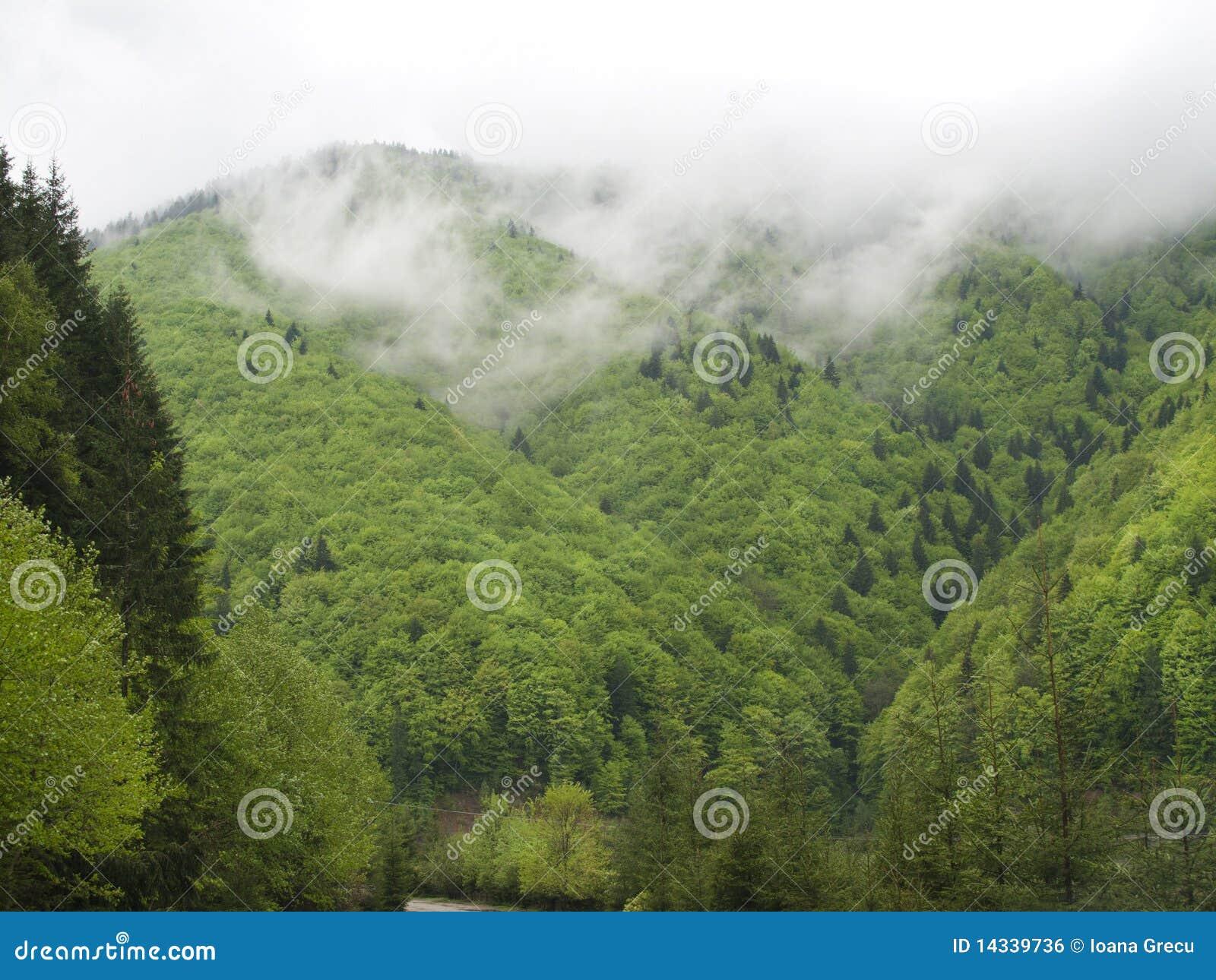 Granskog i oklarheter