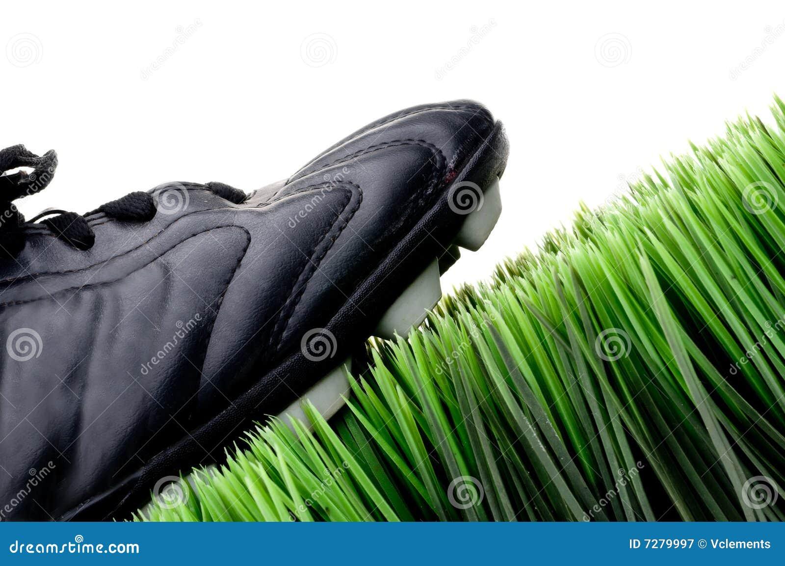 Grapa en hierba verde