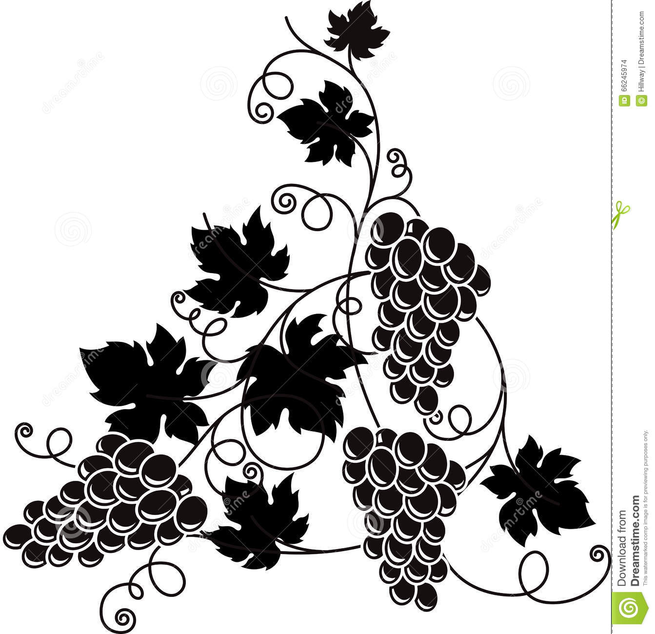 Grape Branch With Bunch Of Grapes And Leaves. Stock Vector ...