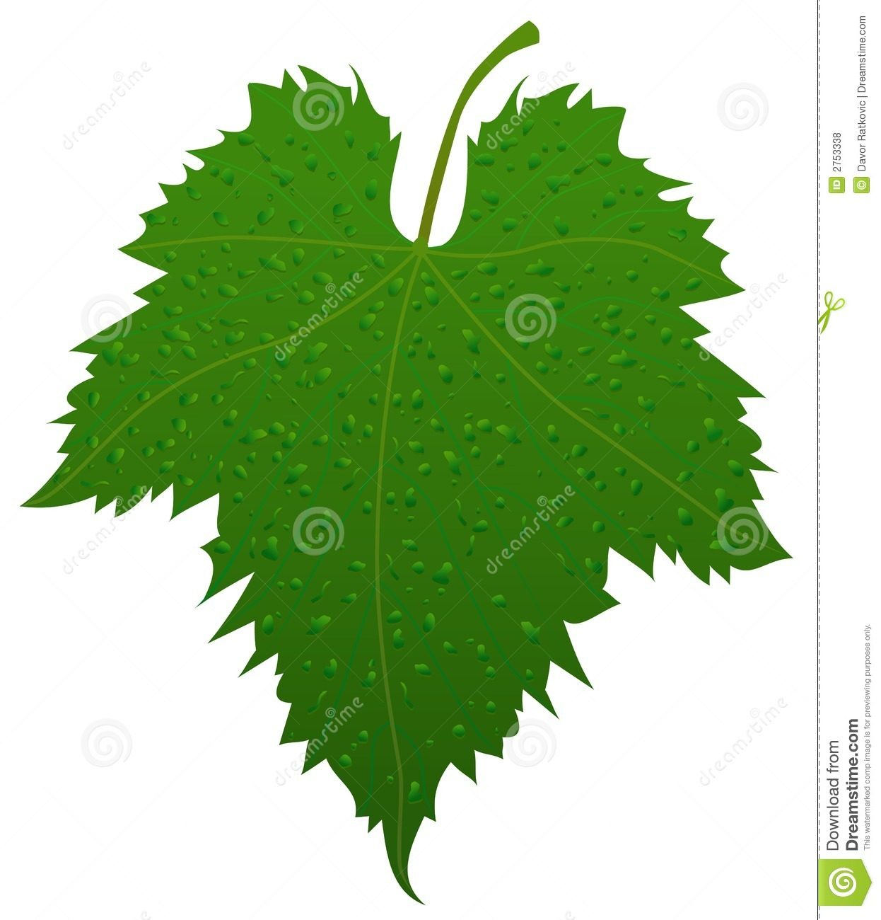 Grape Leaf Stock Vector Illustration Of Drop Beauty 2753338