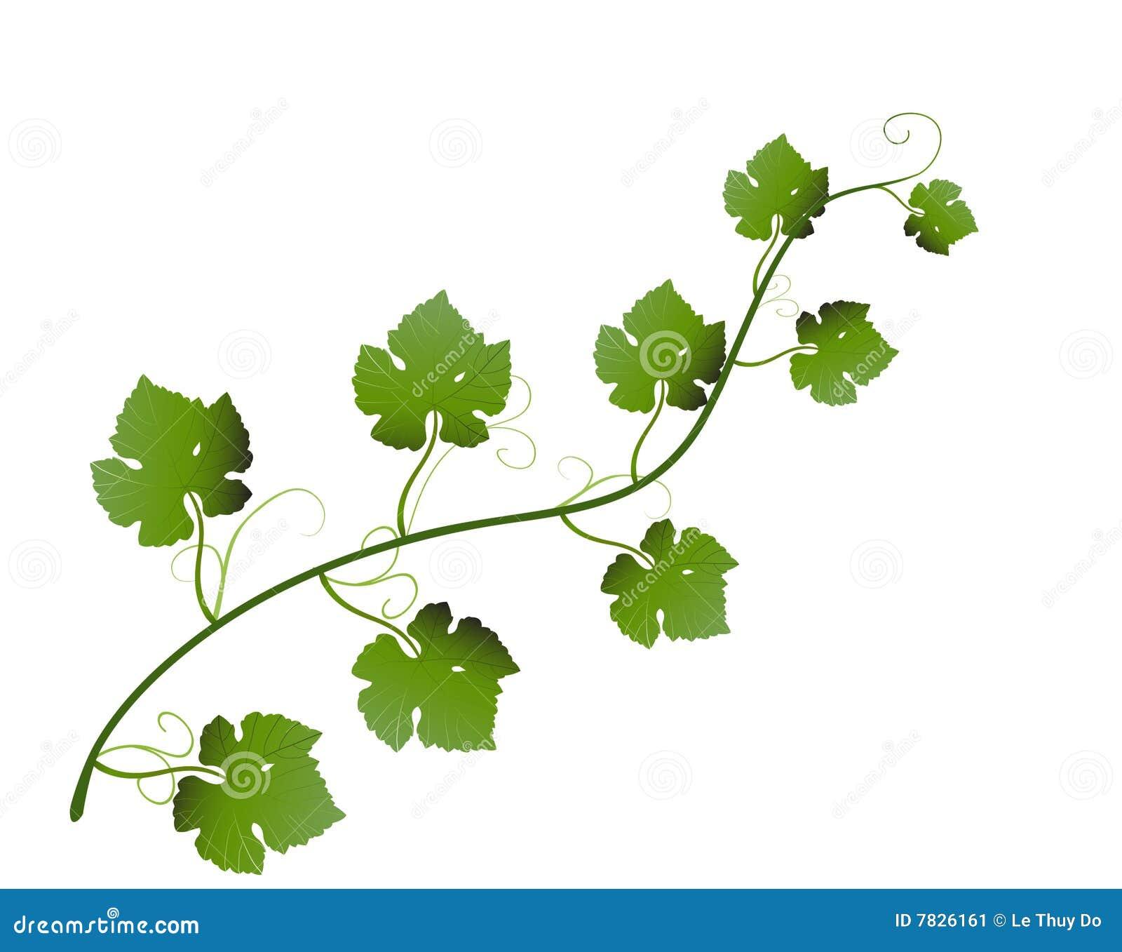 Raster illustration of green grape leaves on vine.