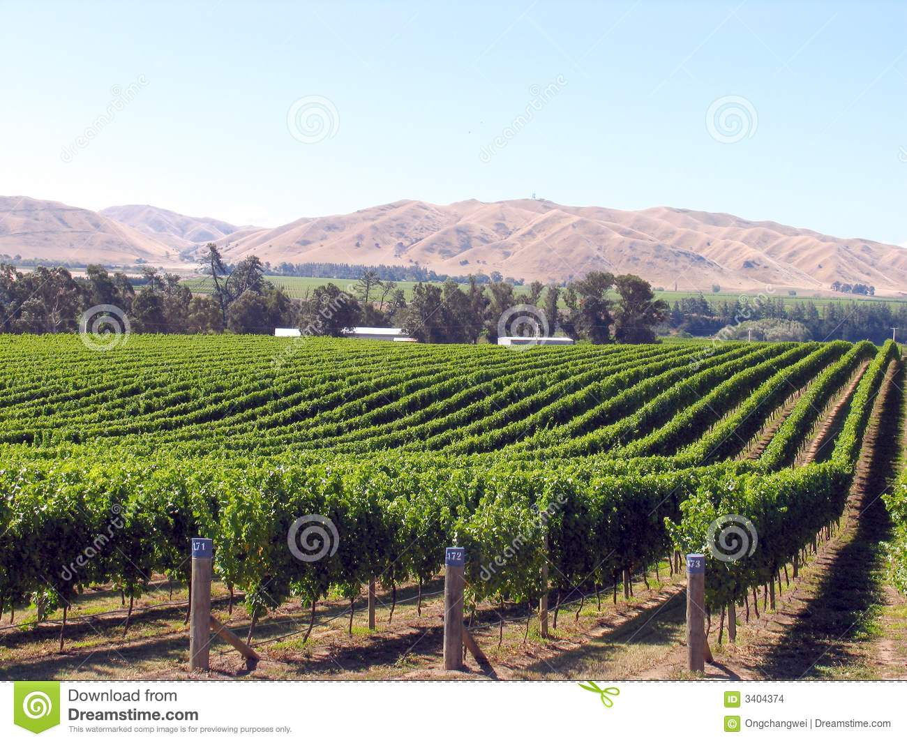 Grape Orchard Stock Images - Image: 3404374