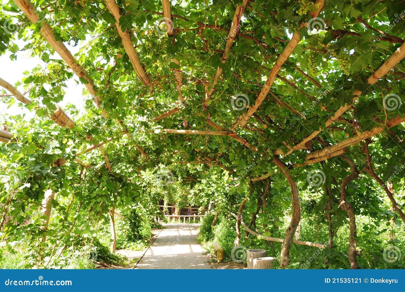 Vine Covered Arbor Tunnel In Formal Historic GardensTurpanXinjiang