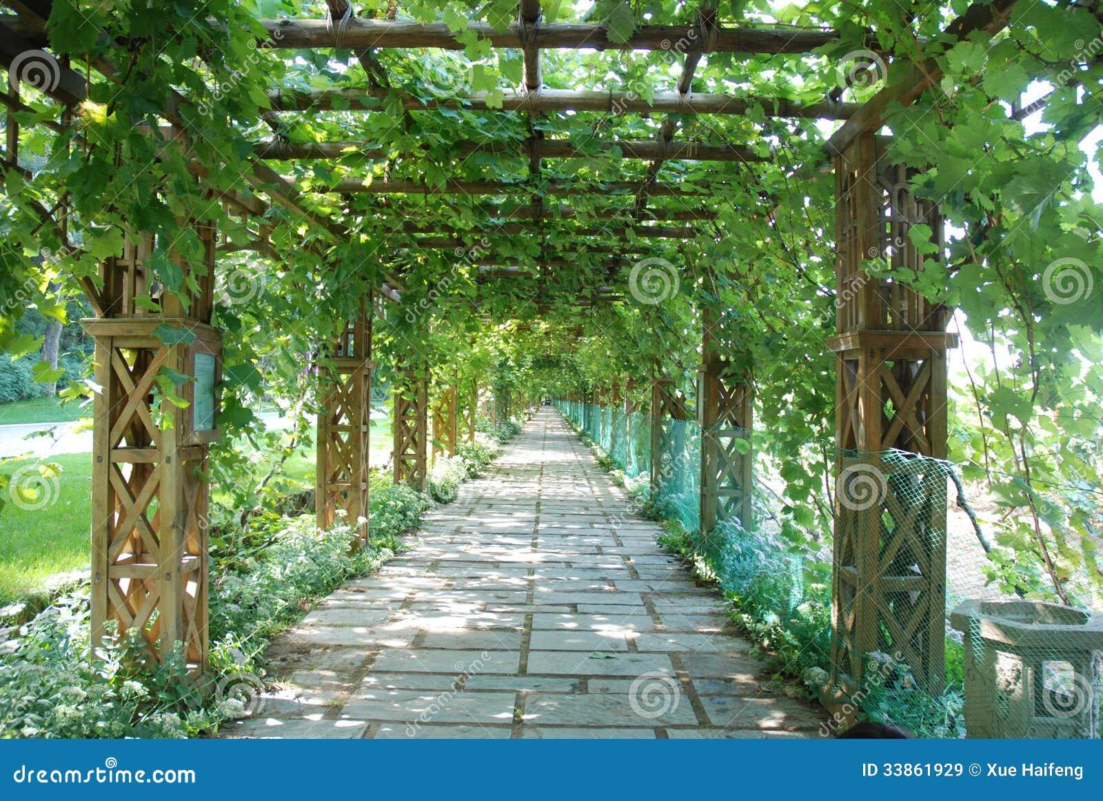 Grape Trellis Royalty Free Stock Images Image 33861929