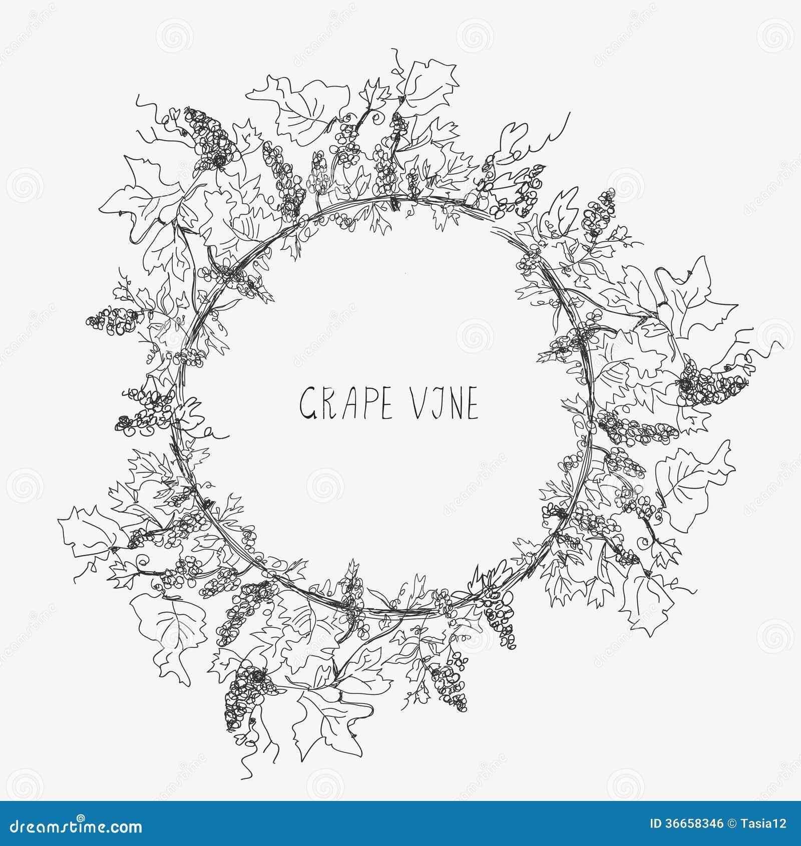grape vine sketch frame round stock vector