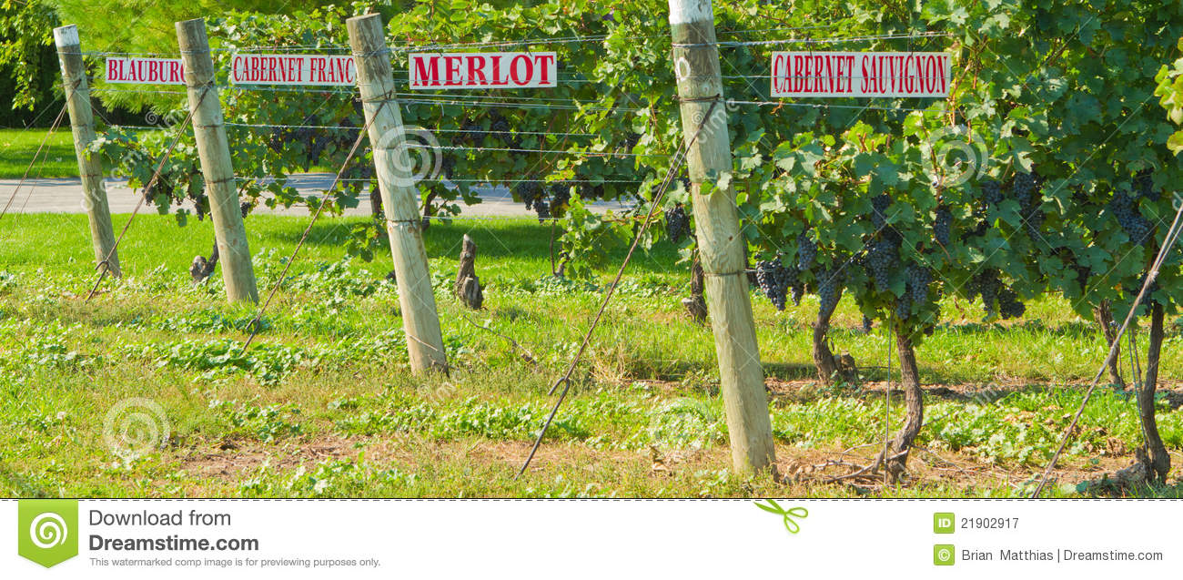 Grape Vines with Signs